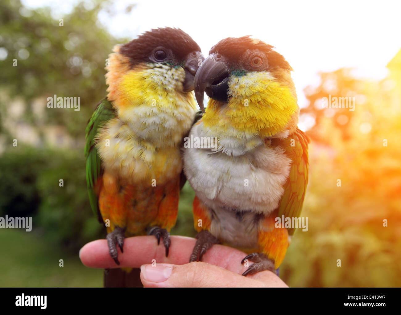 Two birds sitting on a womens finger - Stock Image