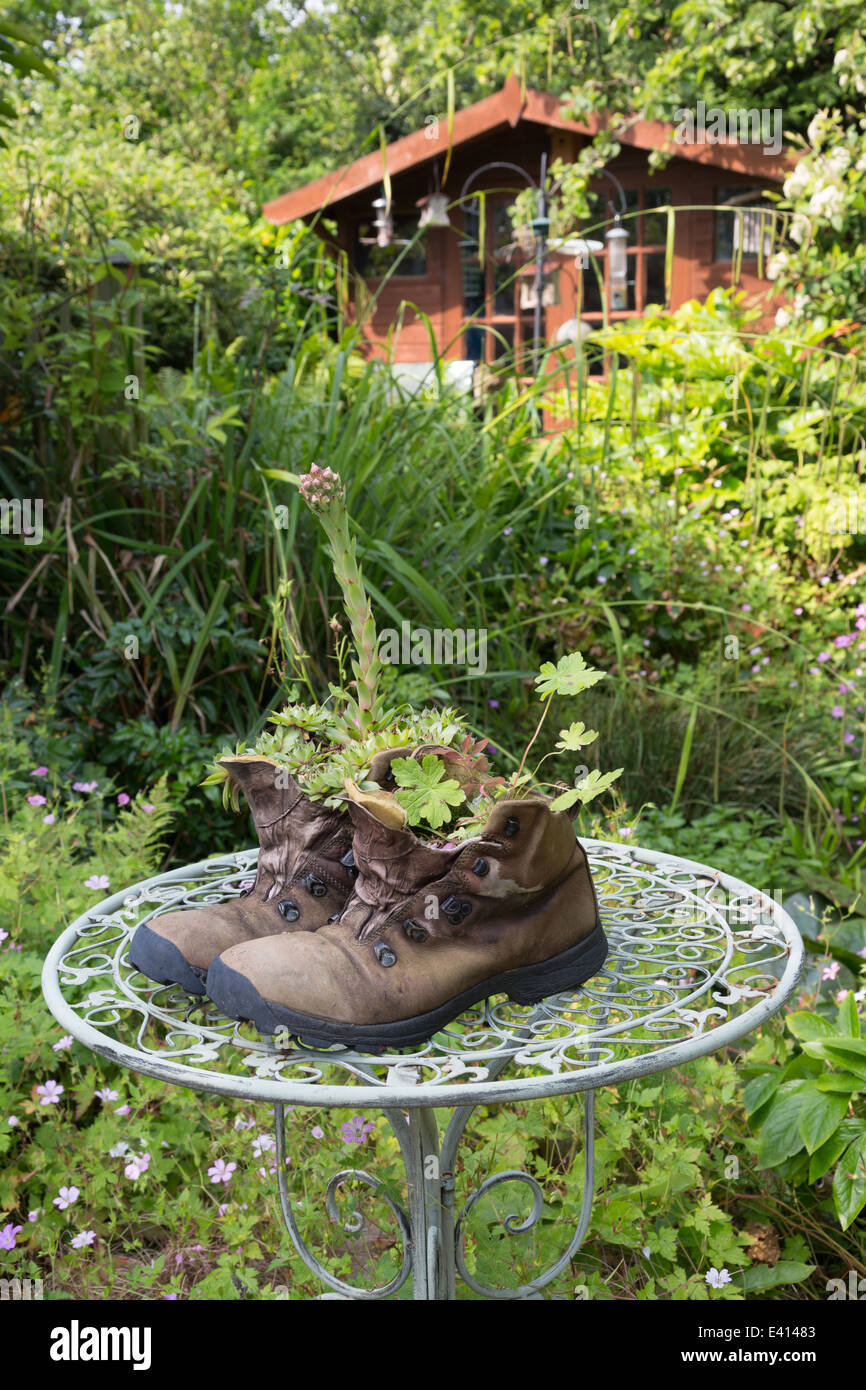 Old walking boots in a garden with house leaks and geraniums planted inside them. - Stock Image