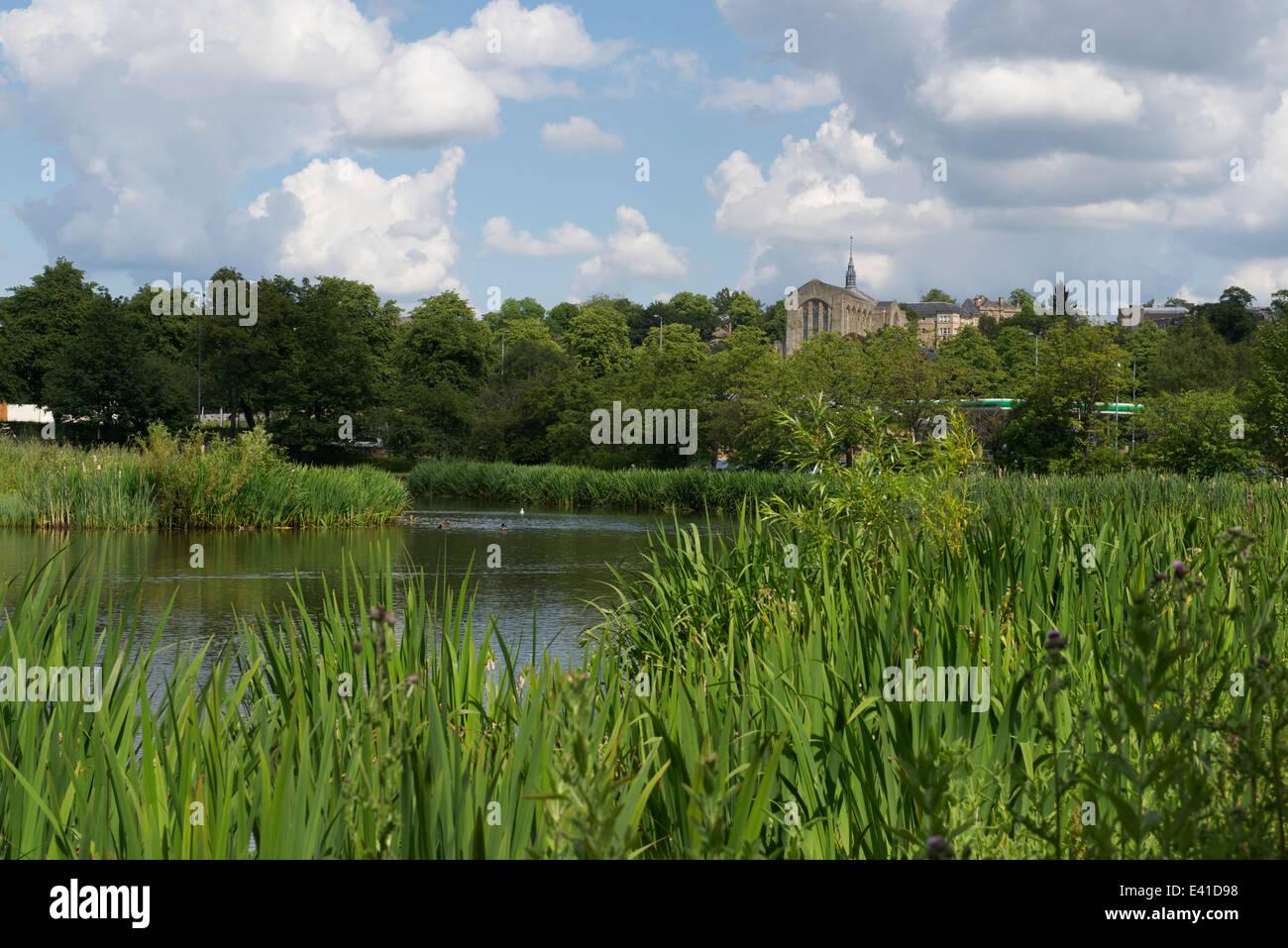 Bingham's Pond, West End, Glasgow. - Stock Image
