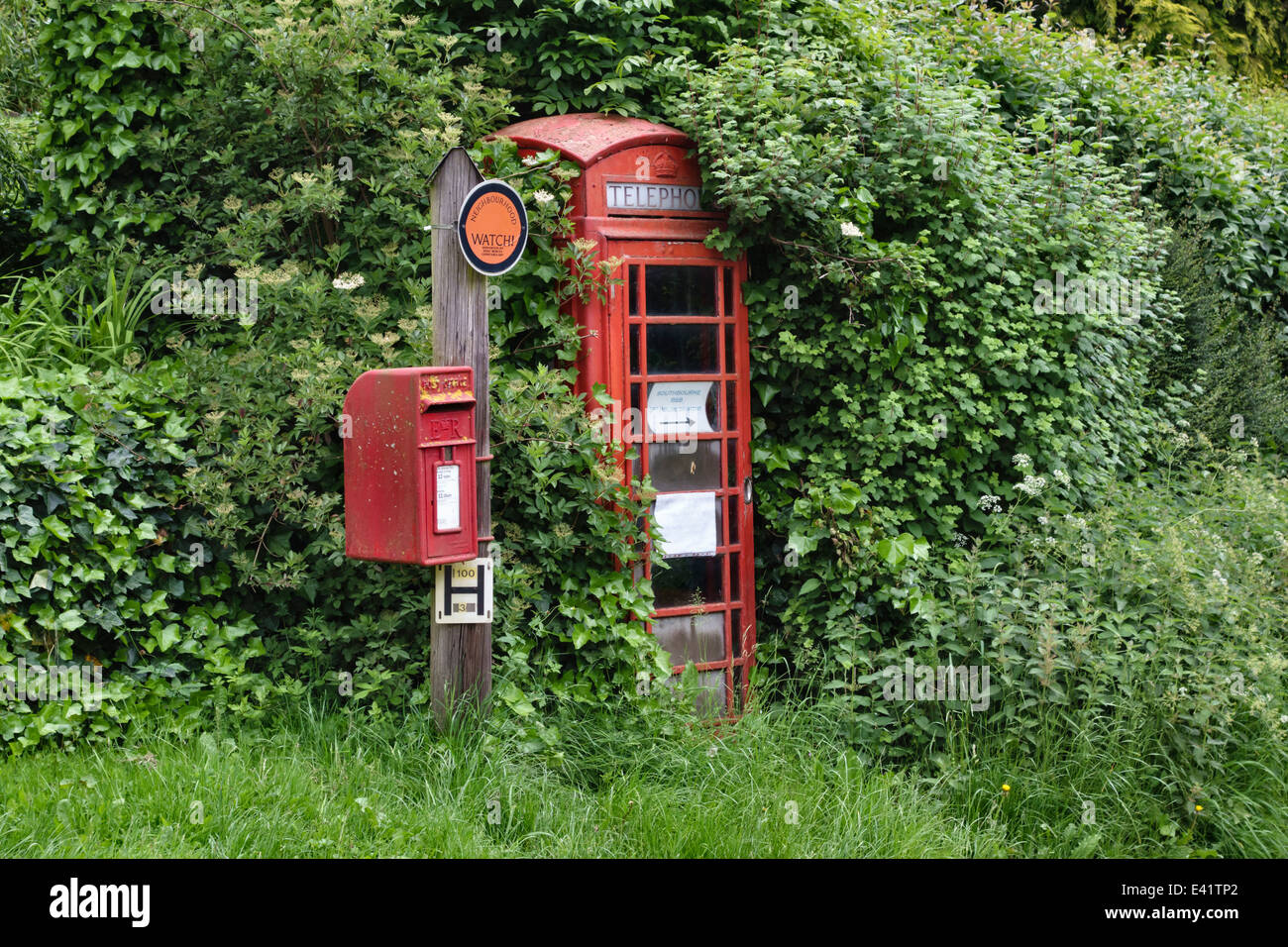 An old telephone kiosk in Herefordshire, UK, almost lost in the overgrown hedge, with a Royal Mail postbox - Stock Image