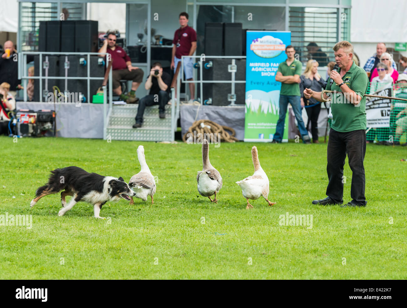 Sheep dog trainer performing at the Mirfield show - Stock Image