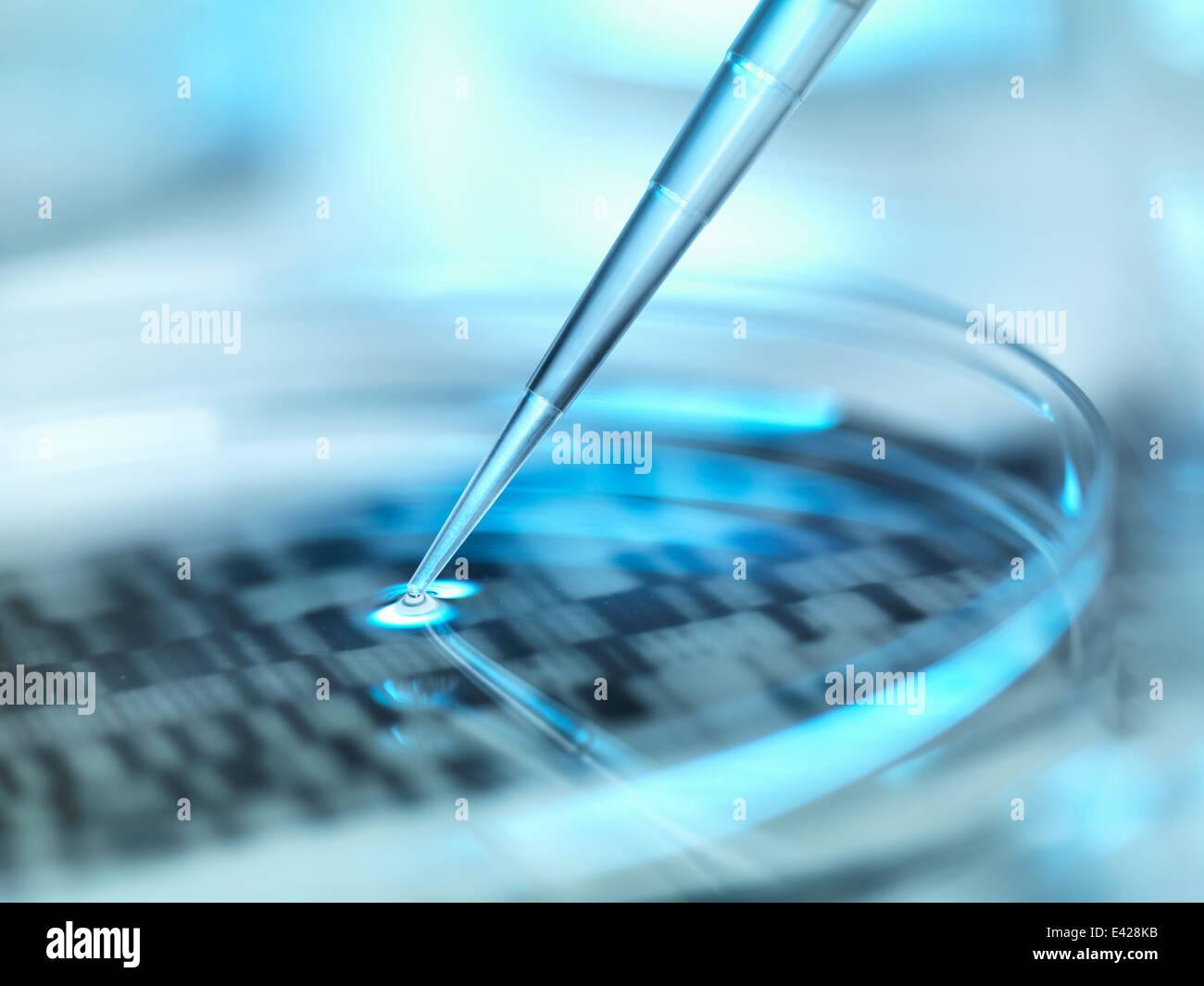 DNA (deoxyribonucleic acid) autoradiogram in a petri dish - Stock Image