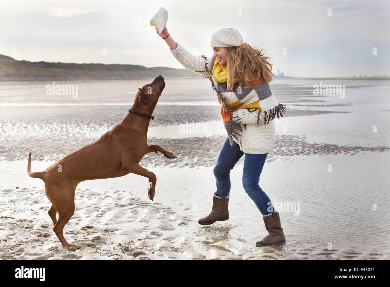 Mid adult woman teasing dog at beach, Bloemendaal aan Zee, Netherlands - Stock Image