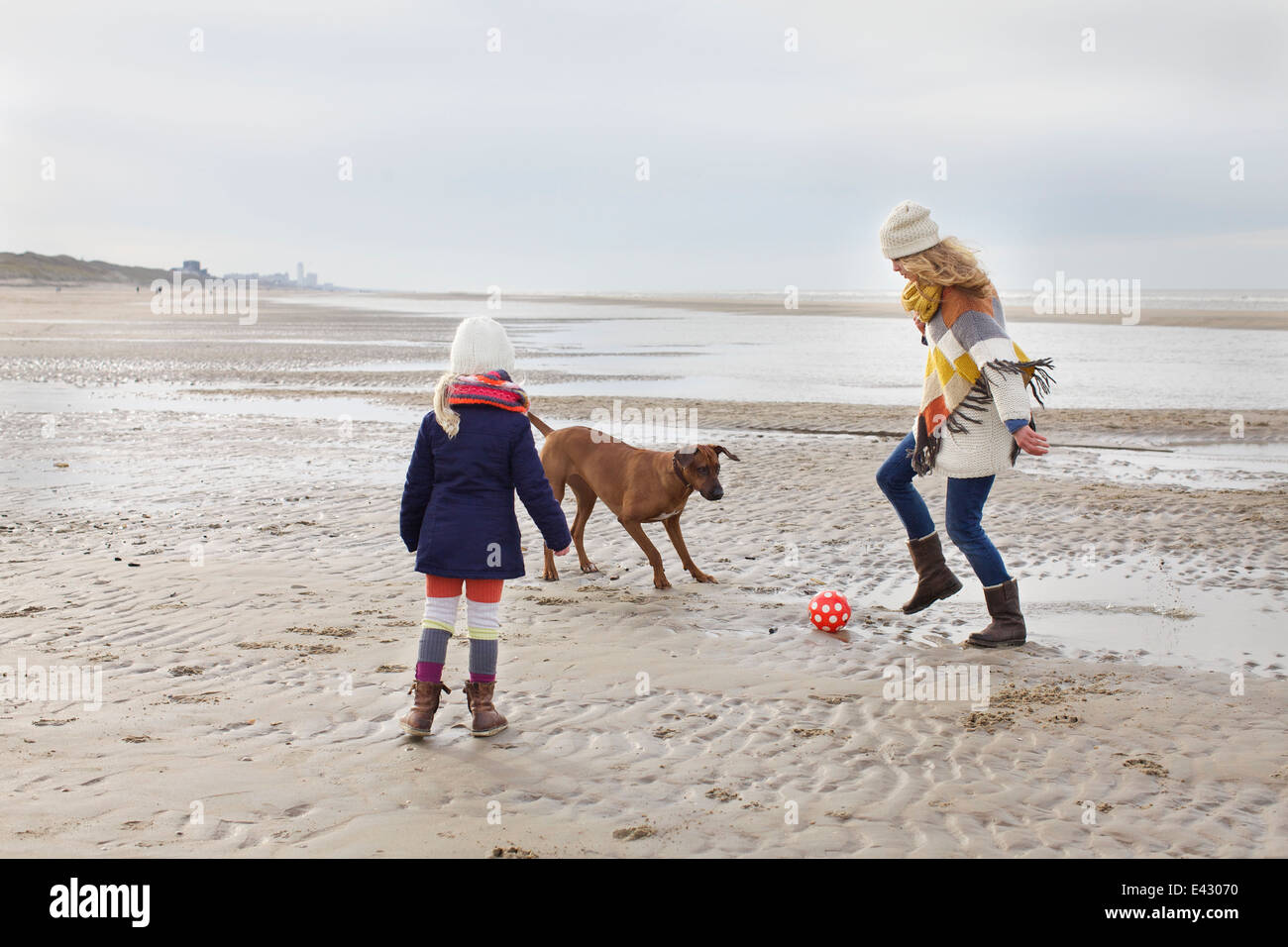 Mid adult woman with daughter and dog playing football on beach, Bloemendaal aan Zee, Netherlands - Stock Image