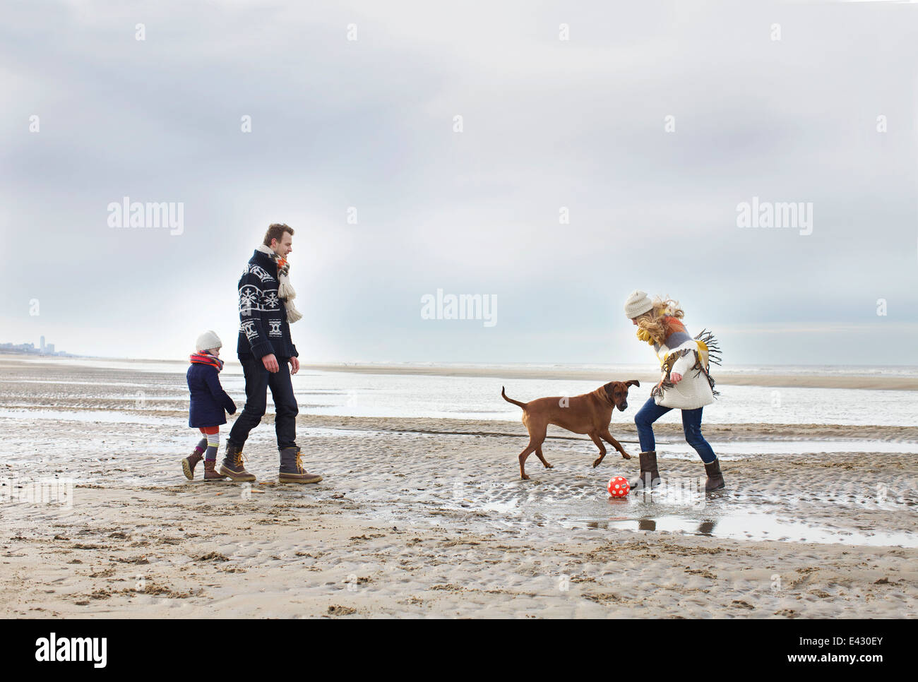 Mid adult parents with daughter and dog playing football on beach, Bloemendaal aan Zee, Netherlands Stock Photo