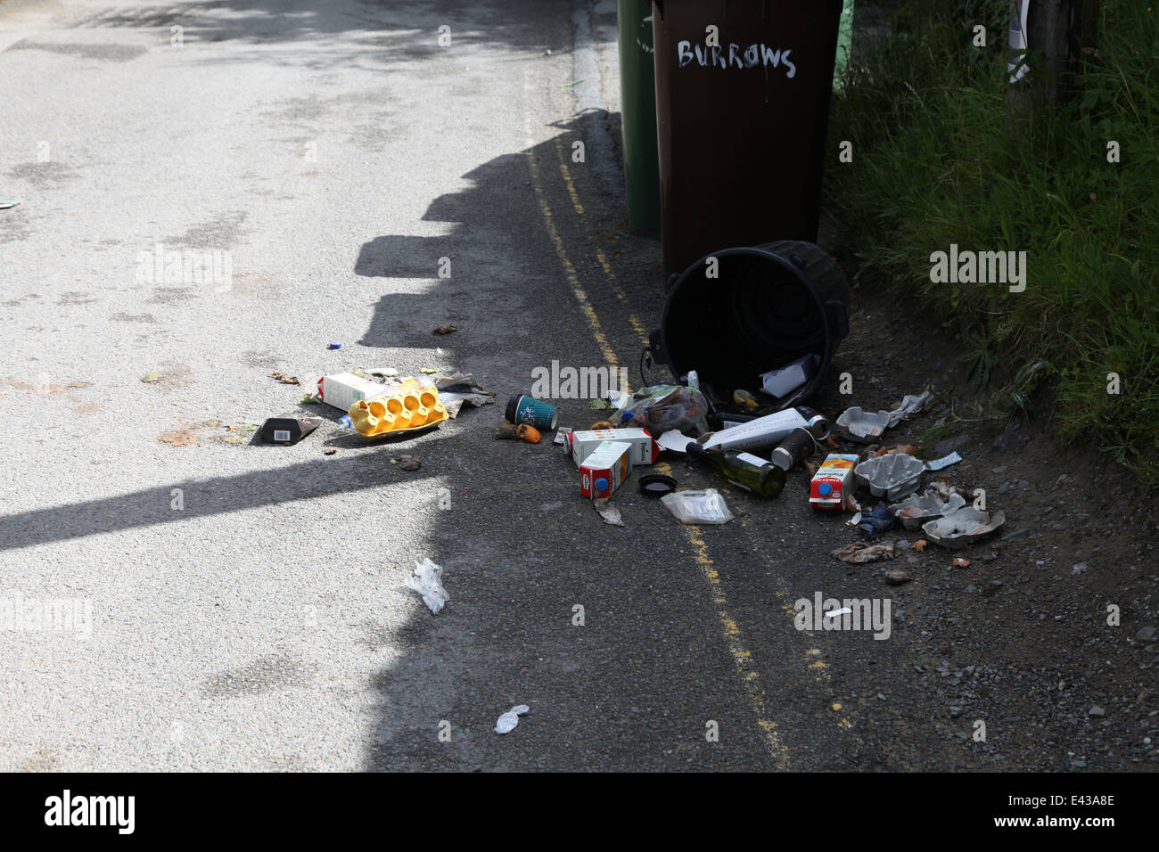 Rubbish bag opened by fox - Stock Image