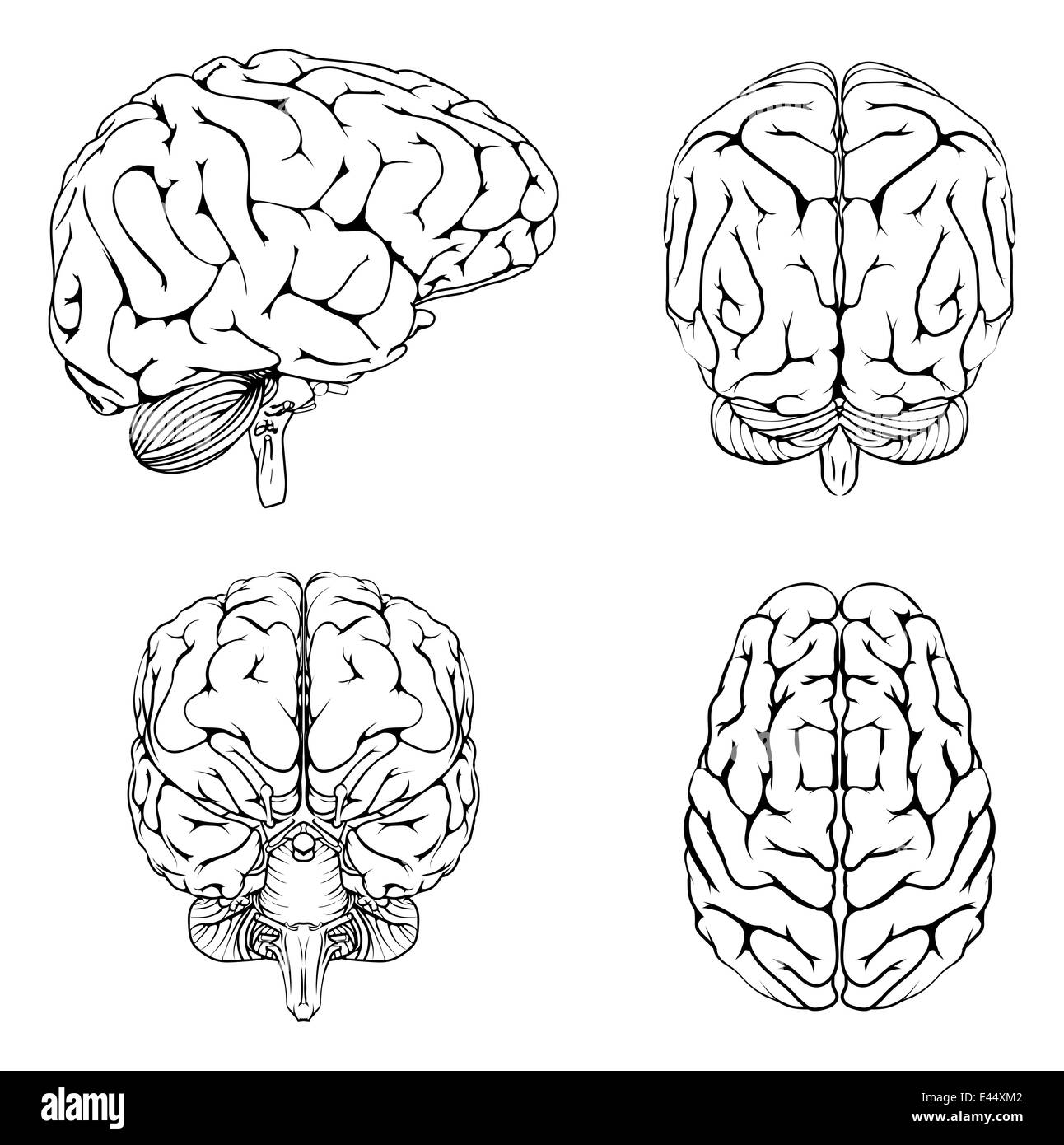 A diagram of a brain from the top side front and back in outline a diagram of a brain from the top side front and back in outline ccuart Images