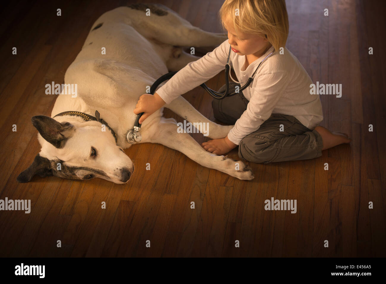 Three year old boy monitoring dog with stethoscope at home - Stock Image