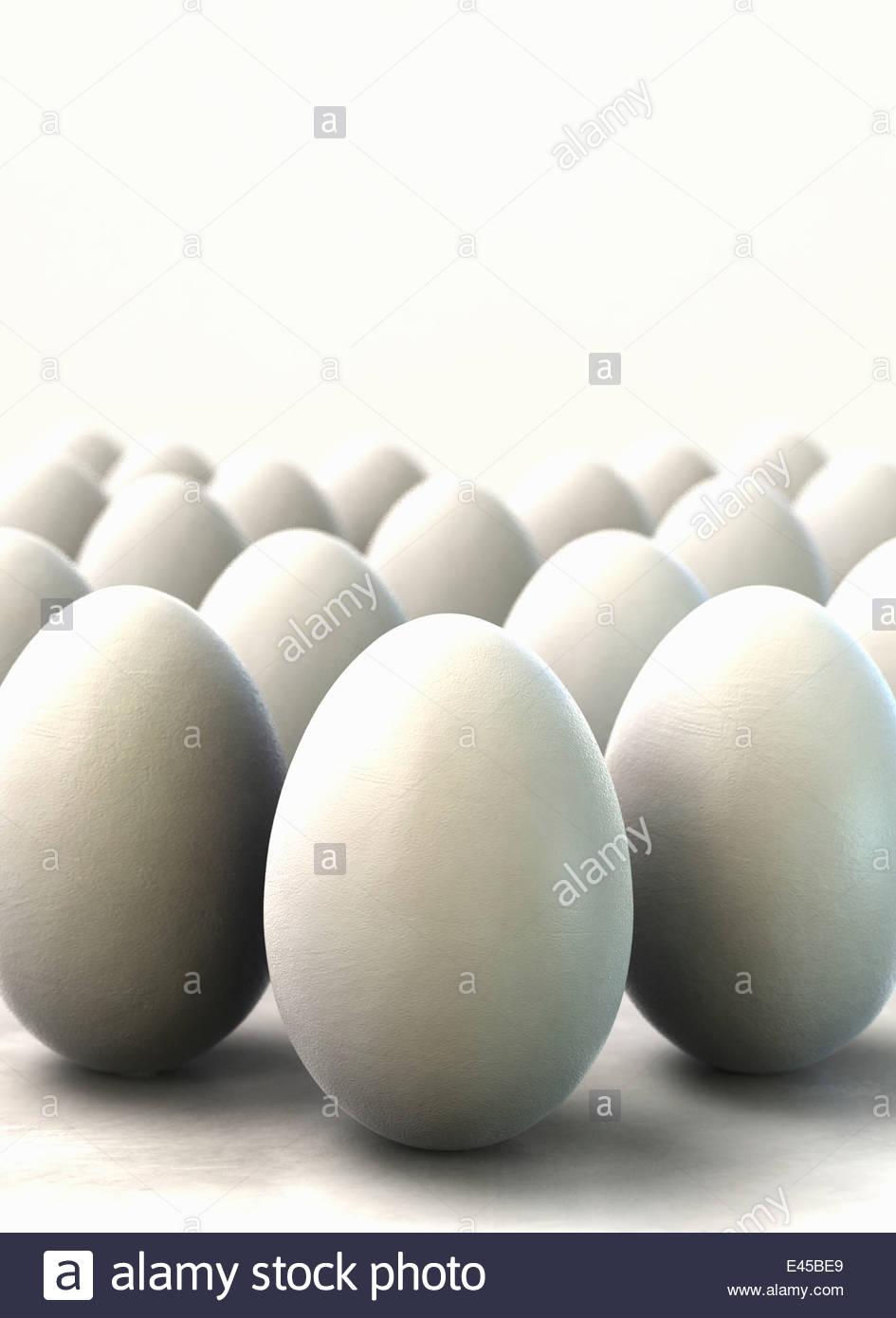 Rows of white eggs - Stock Image
