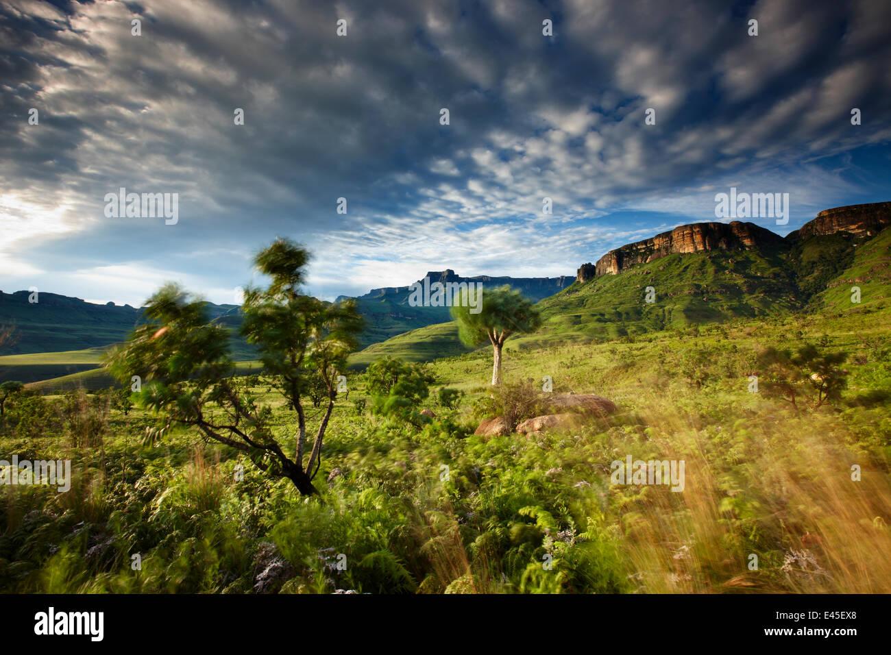 The Ampitheatre, Royal Natal National Park, Drakensberg Mountains, KwaZuluNatal, South Africa - Stock Image