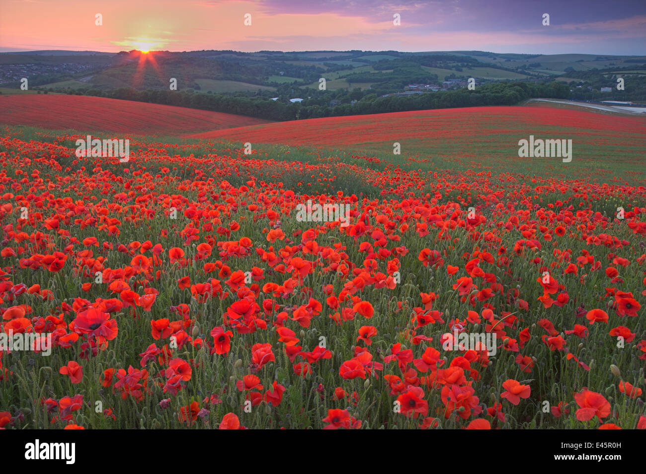 Sunset over fields of Common poppies (Papaver rhoeas) South Downs, West Sussex, England. June 2009 Stock Photo