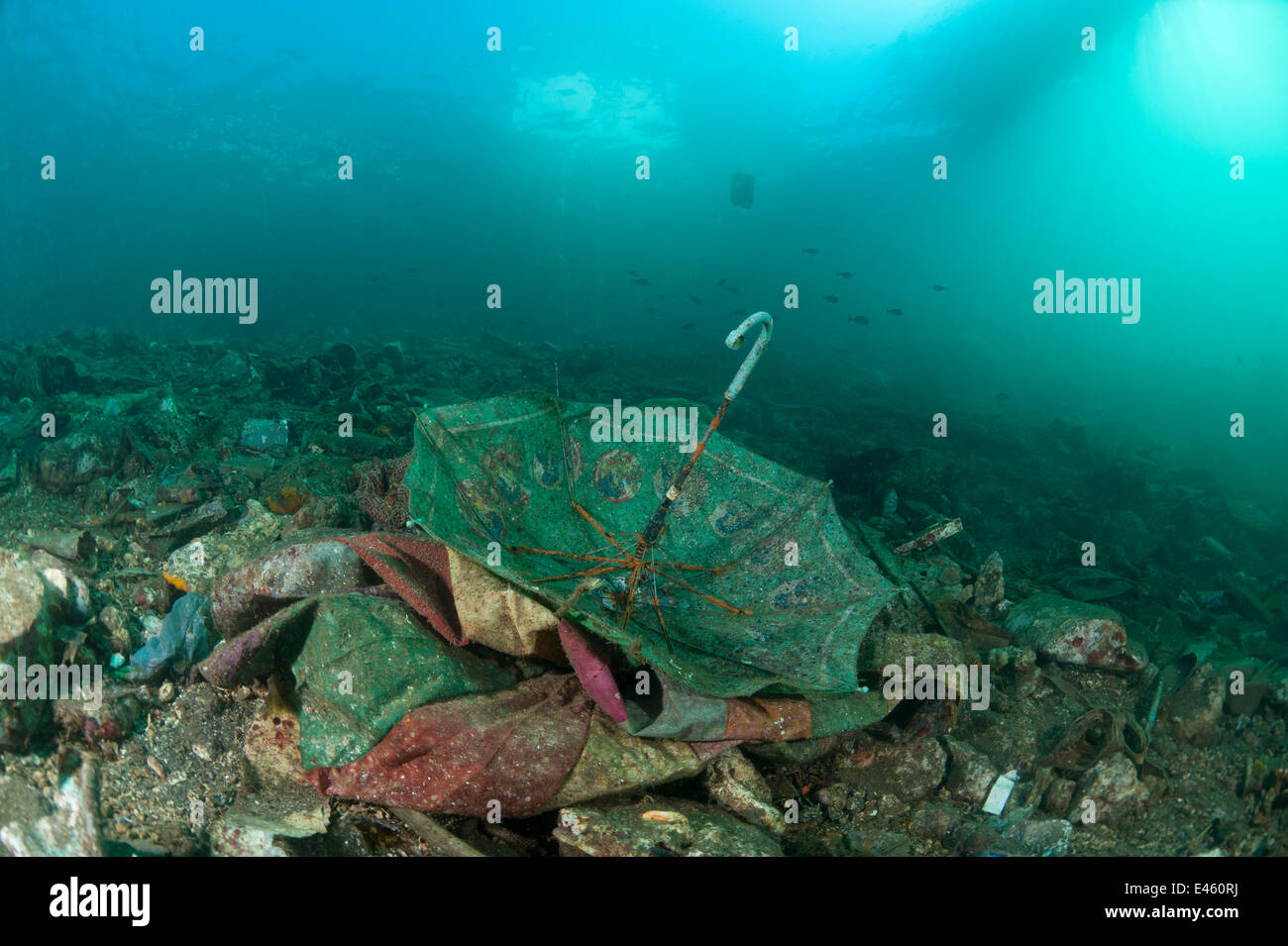 Umbrella and other human waste thrown out into the coastal waters, settling on the ground becoming marine life habitat, - Stock Image