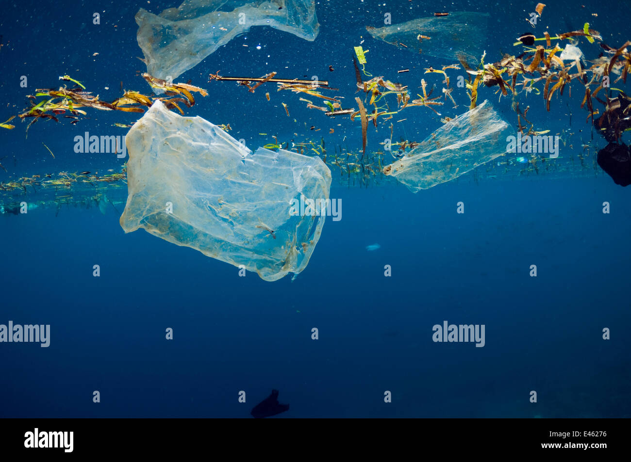 Plastic bags floating at the surface of the sea. Bunaken National Park, North Sulawesi, Indonesia. - Stock Image