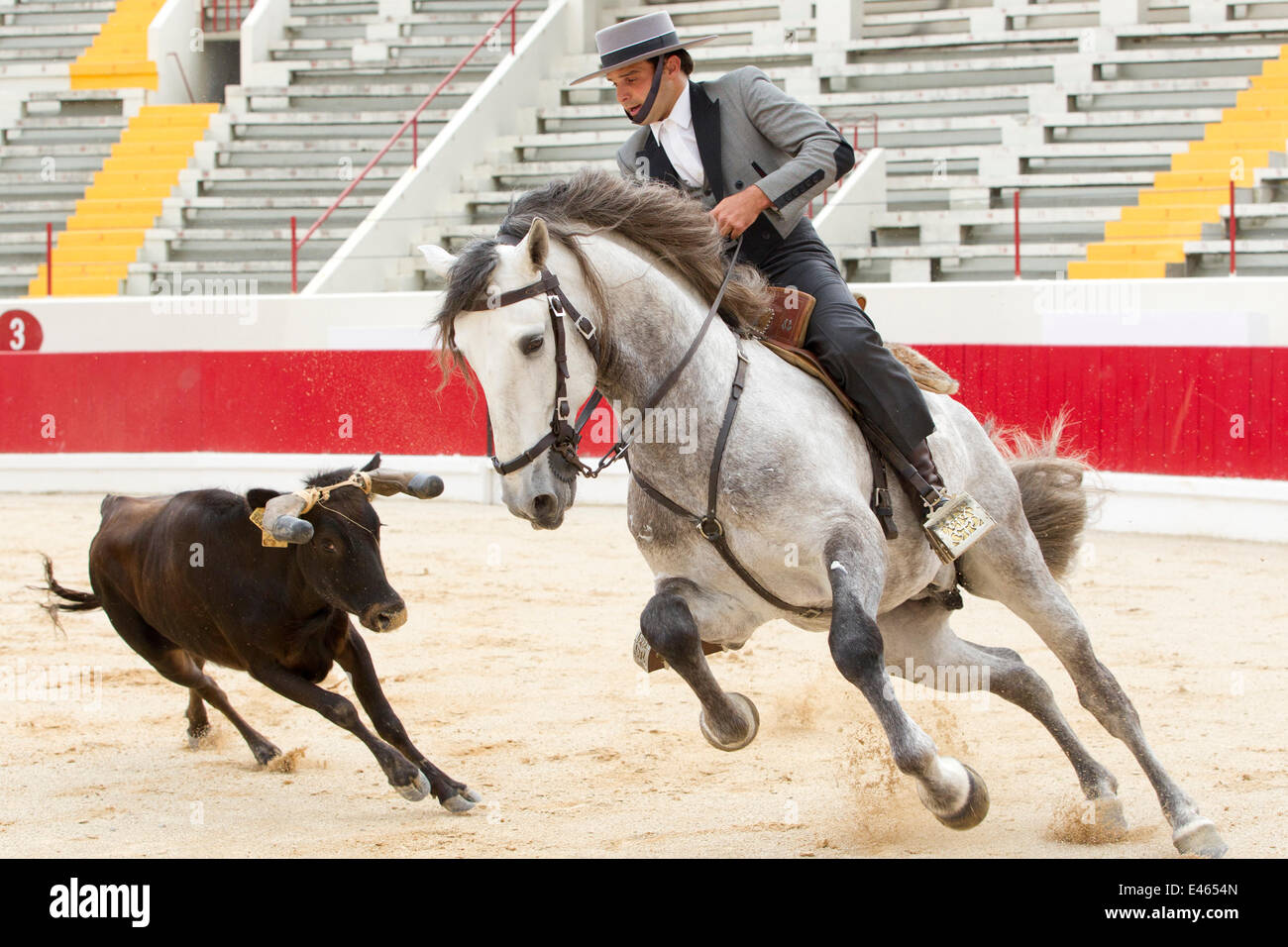 Lusitano horse, bull fighter mounted on grey stallion, in this type of bull fighting neither horse nor bull are - Stock Image