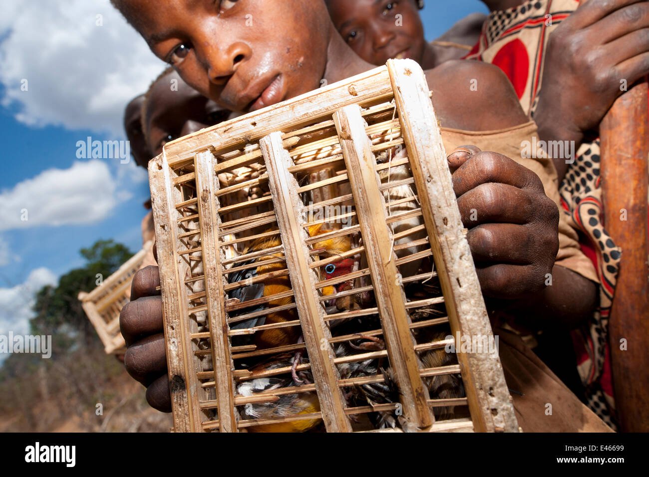 Mozambican children with captive passerines including Red-throated Twinspot (Hypargos niveoguttatus). Birds are - Stock Image