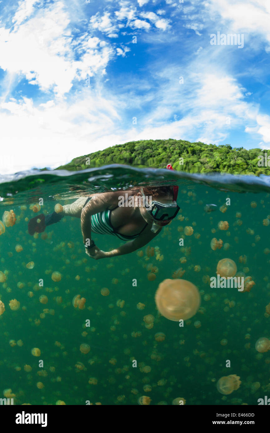 Snorkeler swimming with harmless Jellyfish (Mastigias papua etpisonii), Jellyfish Lake, Rock Islands, Palau, Micronesia - Stock Image