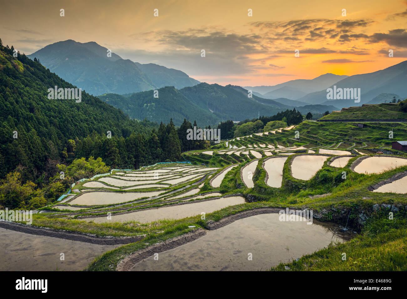 Japanese rice terraces at sunset. Maruyama-senmaida, Kumano, Japan. - Stock Image