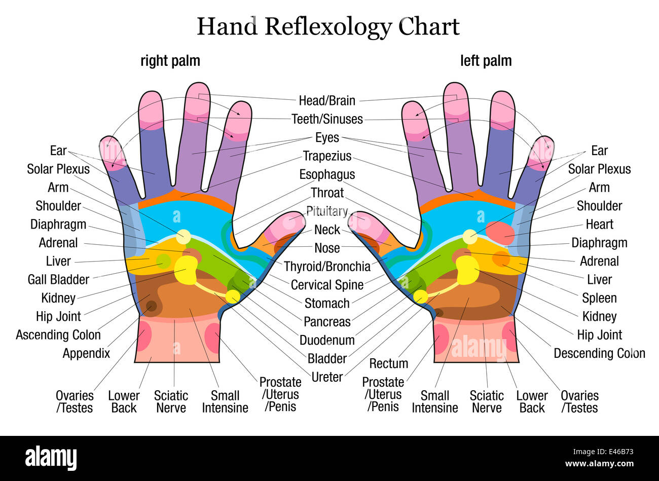 Hand Reflexology Chart With Accurate Description Of The