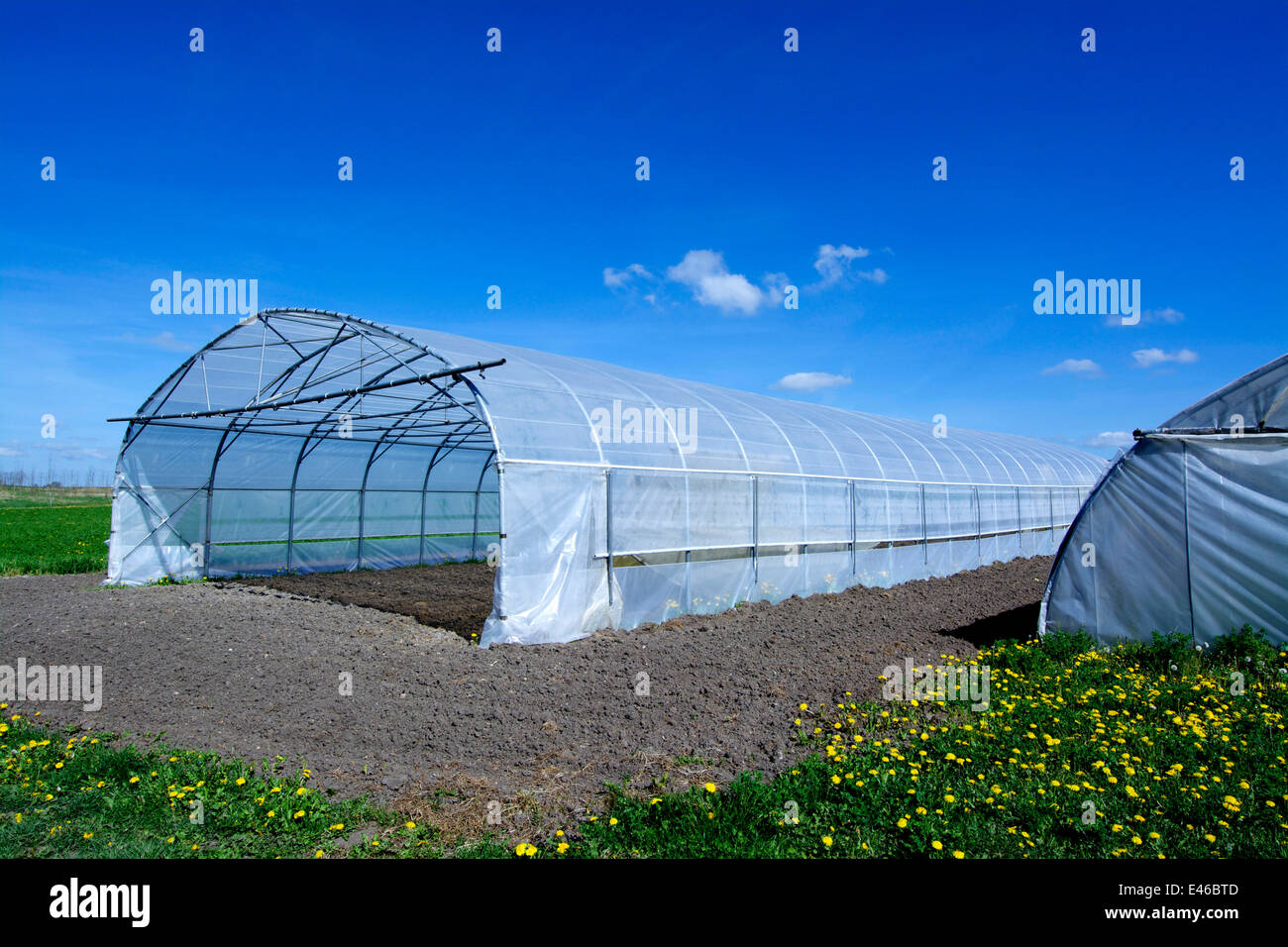 Agricultural polytunnel greenhouse / cloche in a field - Stock Image