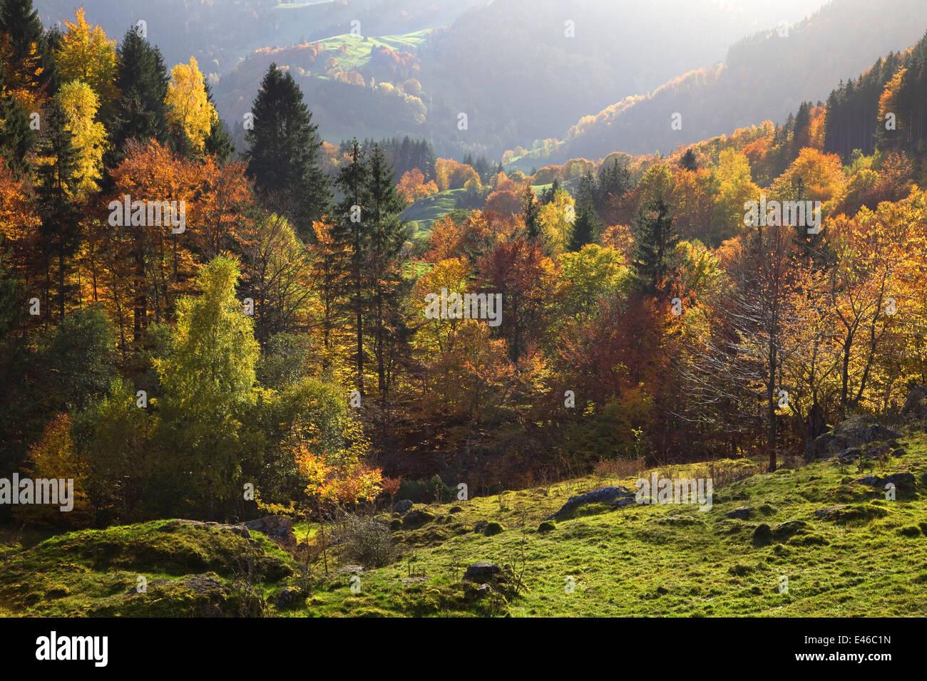 Autumn Black forest Germany Coloured leaves Feldberg Schwarzwald Stock Photo