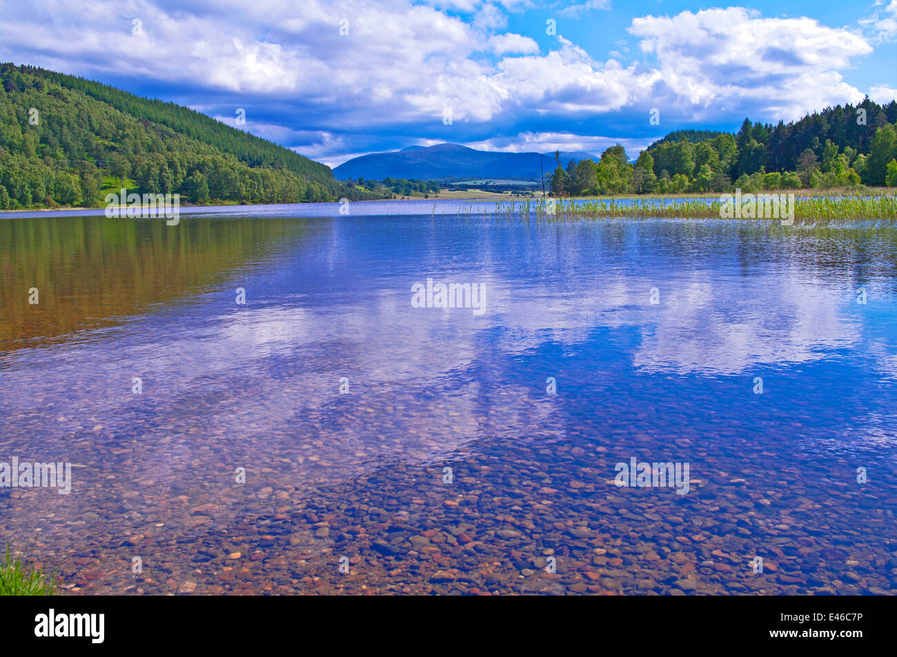 Reflections on Loch Pityoulish, calm summer's day, near Aviemore, Cairngorms National Park, Scottish Highlands, - Stock Image