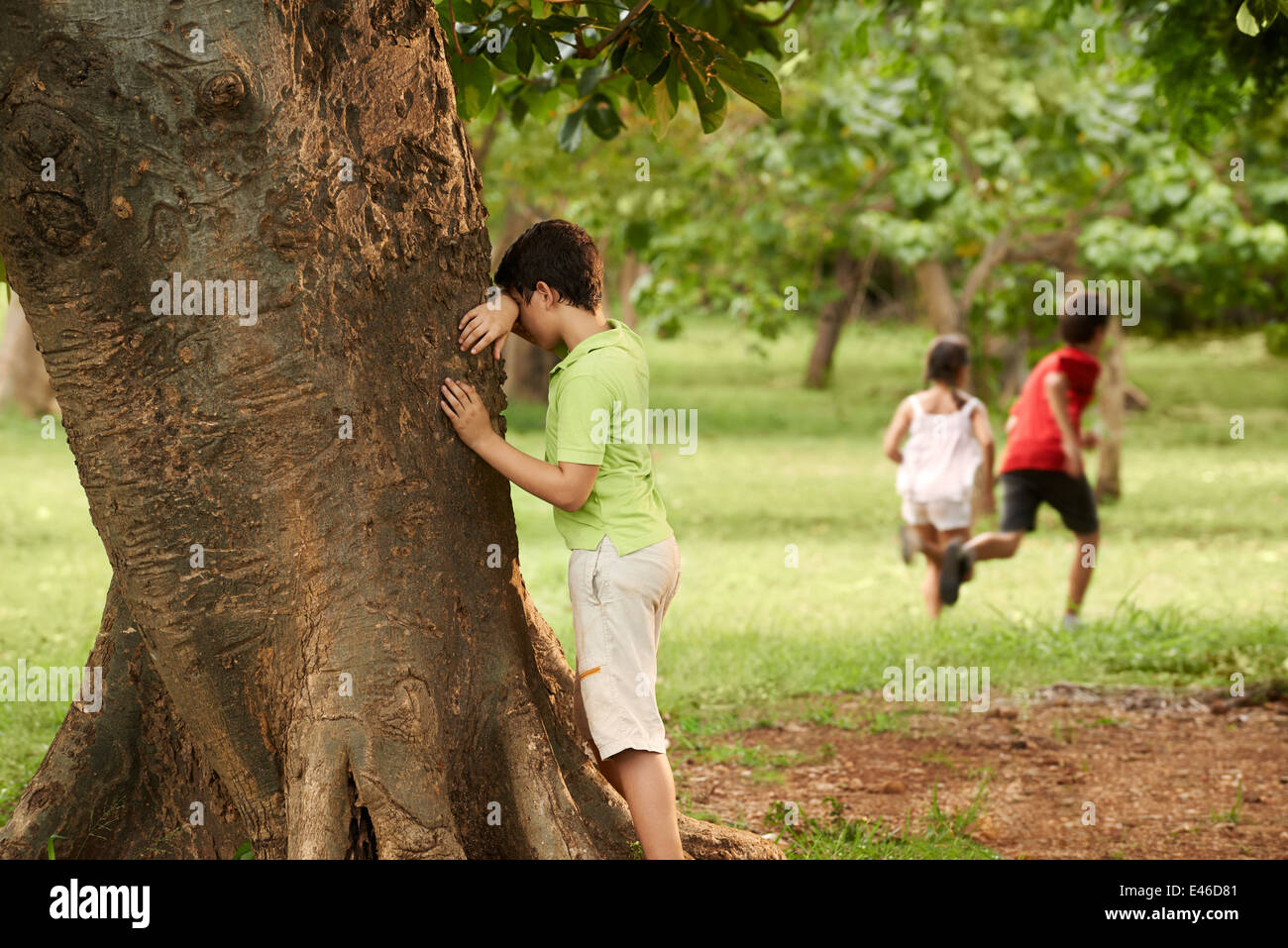 young boys and girls playing hide and seek in park, with kid counting leaning on tree - Stock Image