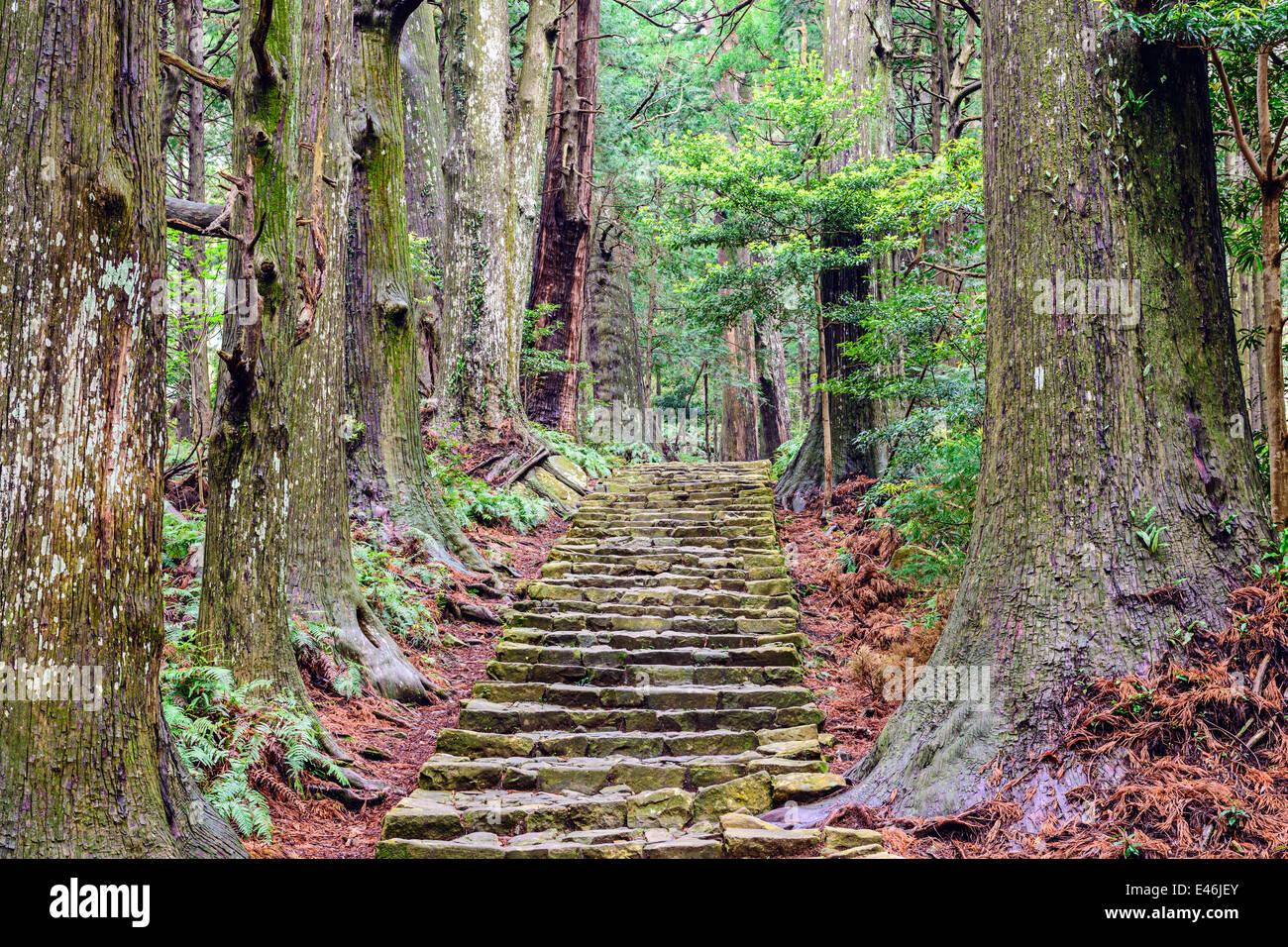 Kumano Kodo at Daimon-zaka, a sacred trail designated as a UNESCO World Heritage site in Nachi, Wakayama, Japan. - Stock Image