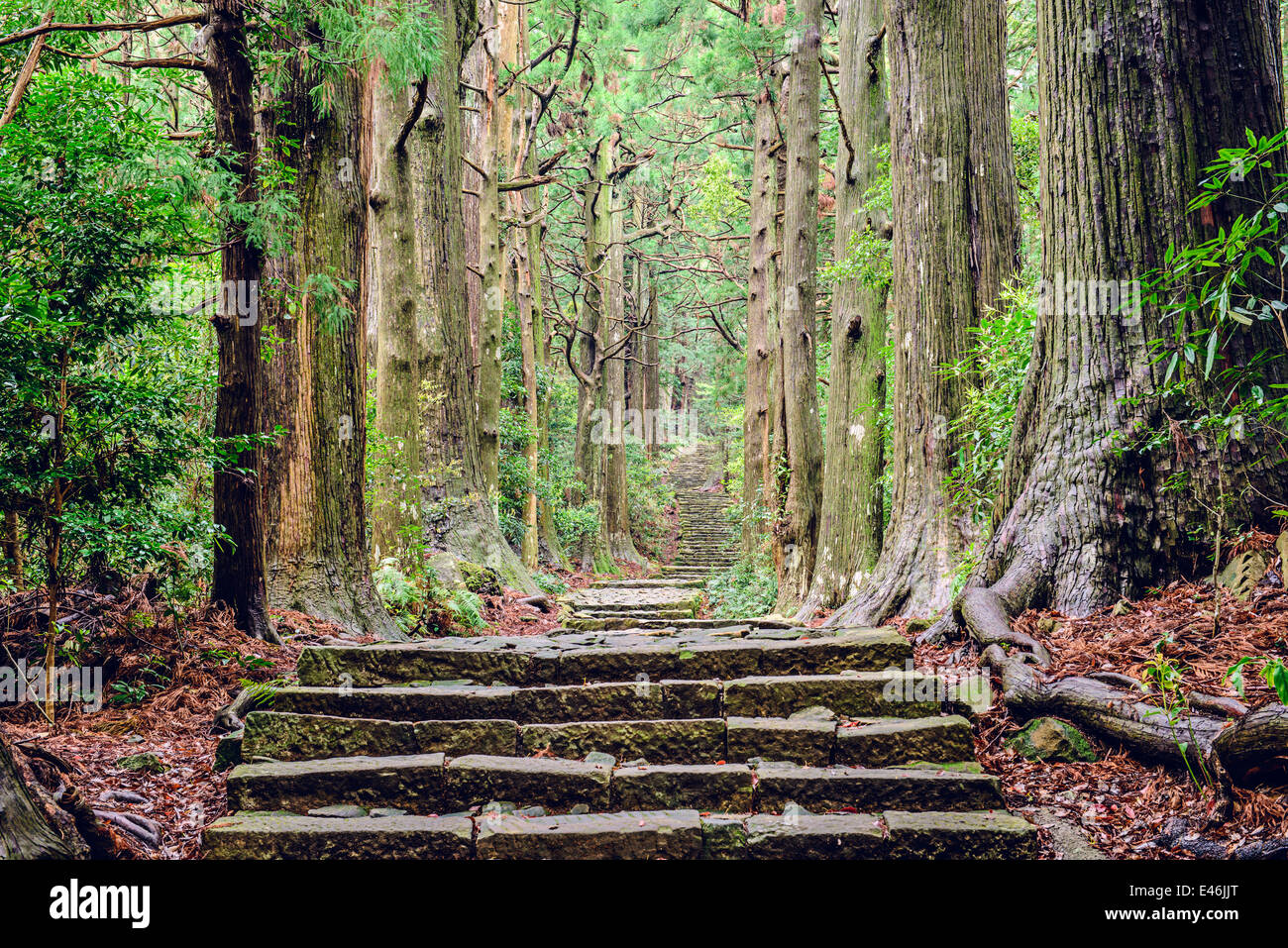 Kumano Kodo at Daimon-zaka, a sacred trail designated as a UNESCO World Heritage site in Nachi, Wakayama, Japan. - Stock Image