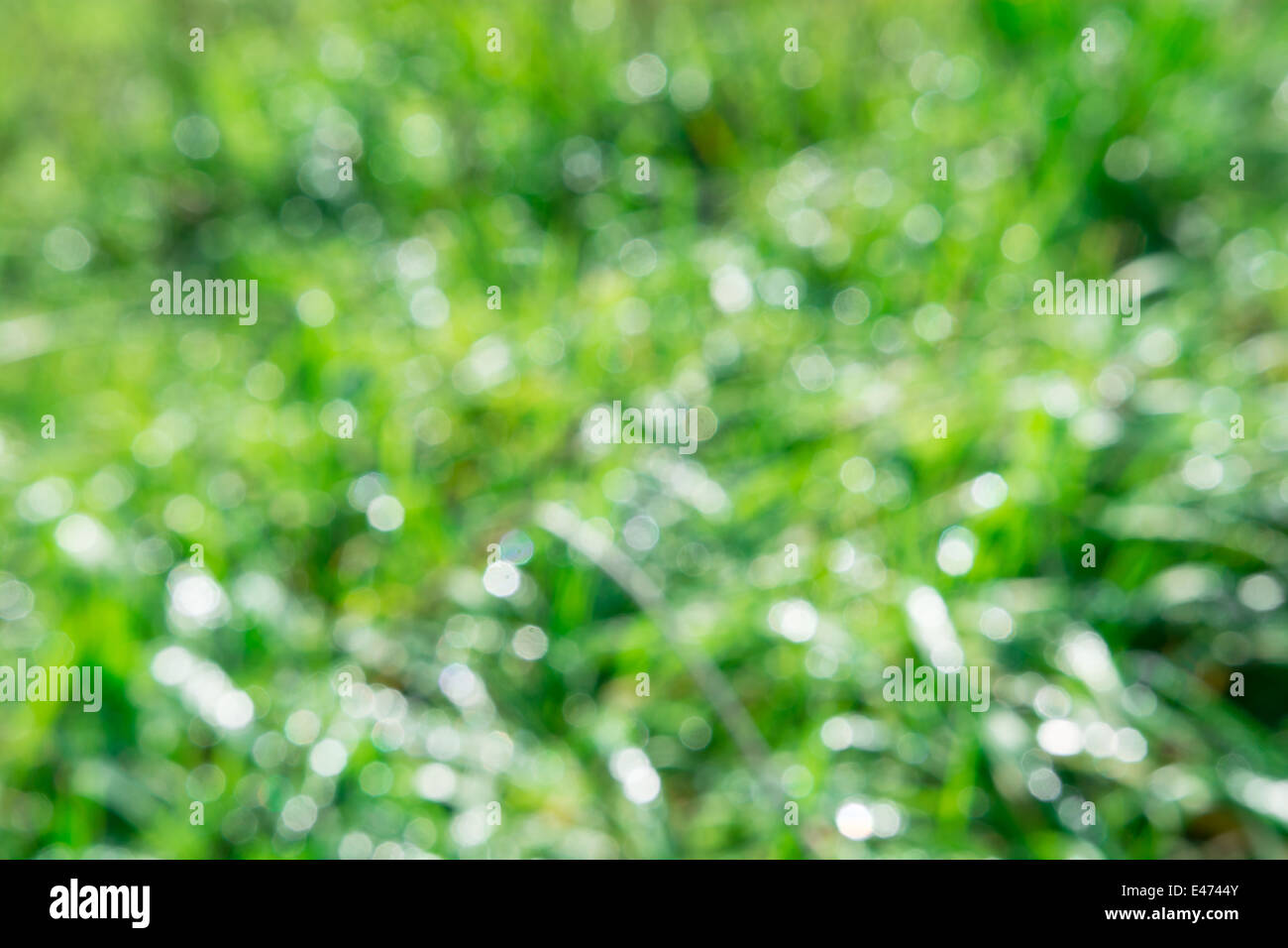 the beautiful morning sun light effect with the dew on the grass - Stock Image