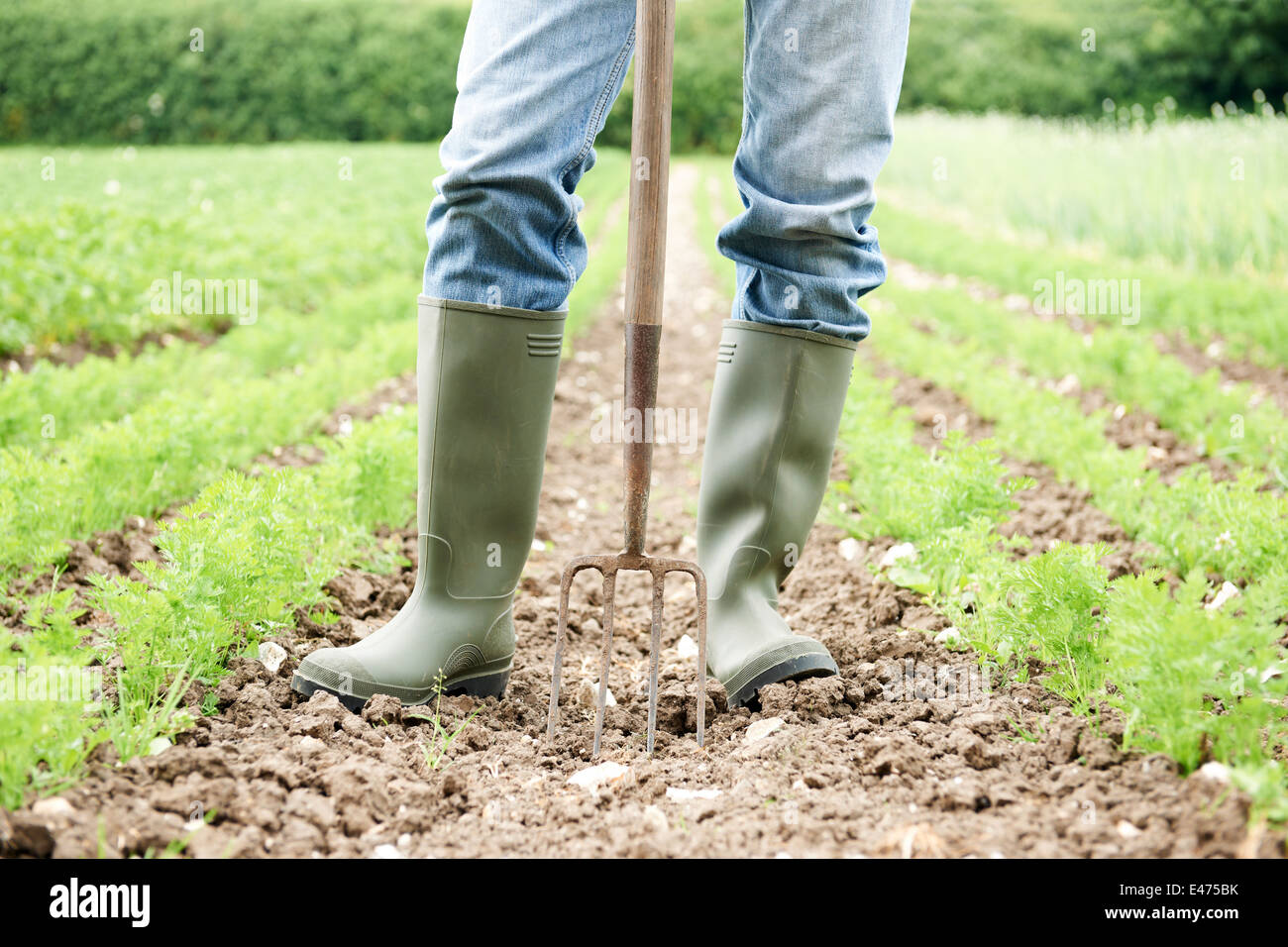 Close Up Of Farmer Working In Organic Farm Field - Stock Image