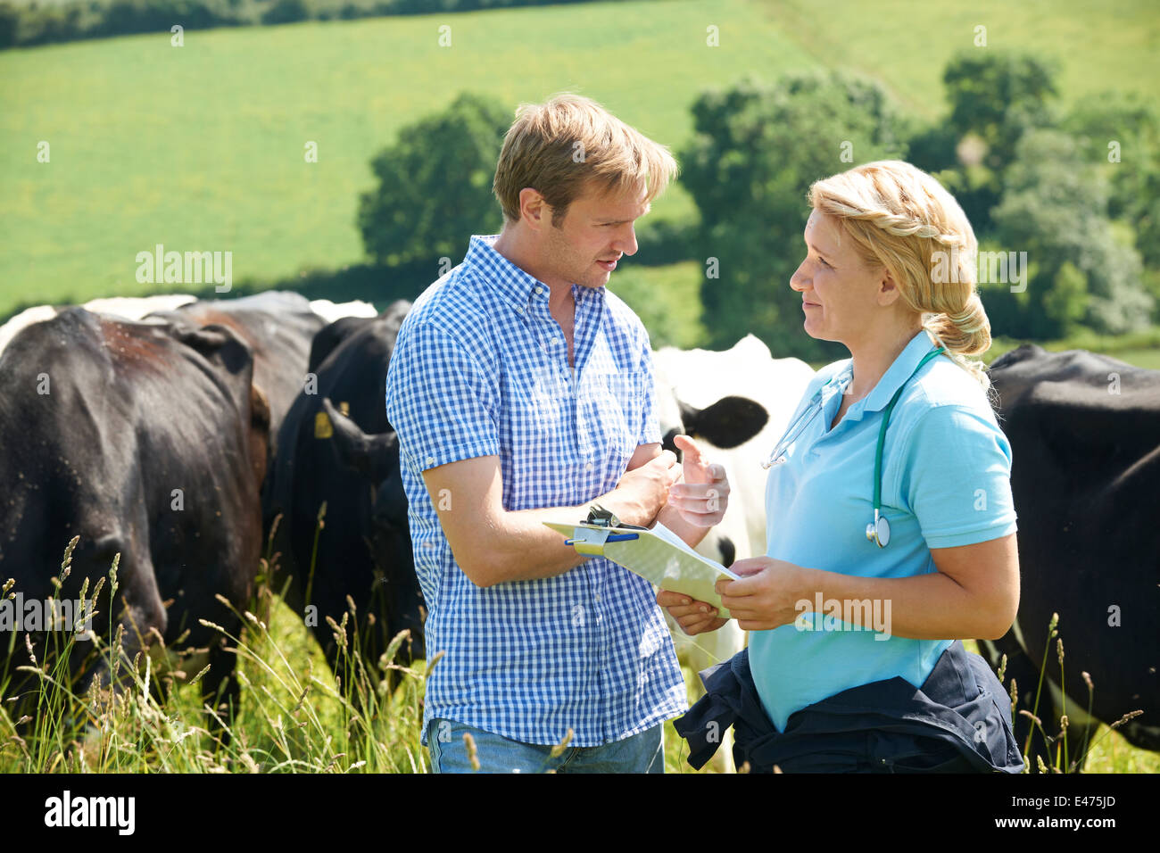Dairy Farmer Talking To Vet In Field With Cattle In Background - Stock Image