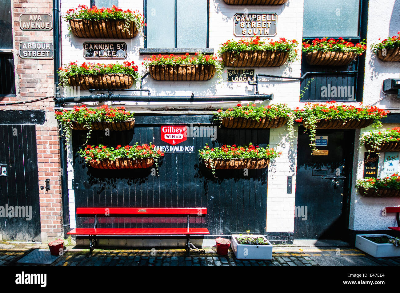 Hanging baskets and red benches outside the Duke of York pub, Belfast - Stock Image