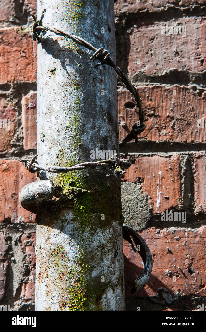 Barbed wire around a downspout to prevent people climbing up it. - Stock Image