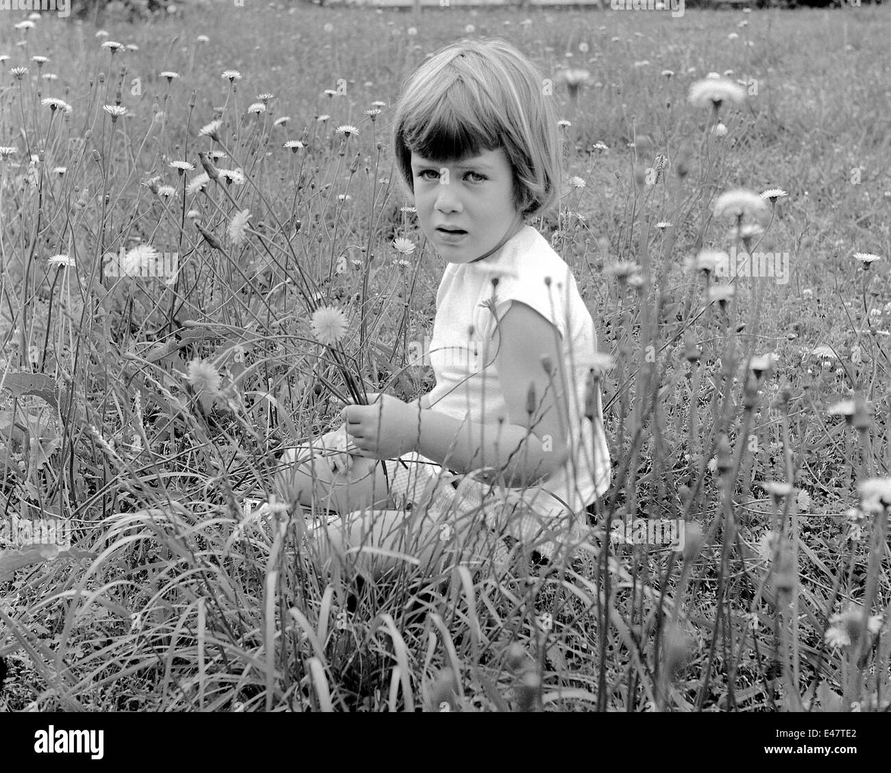 Young Girl Sitting In A Field Of Dandelions Picking Flowers