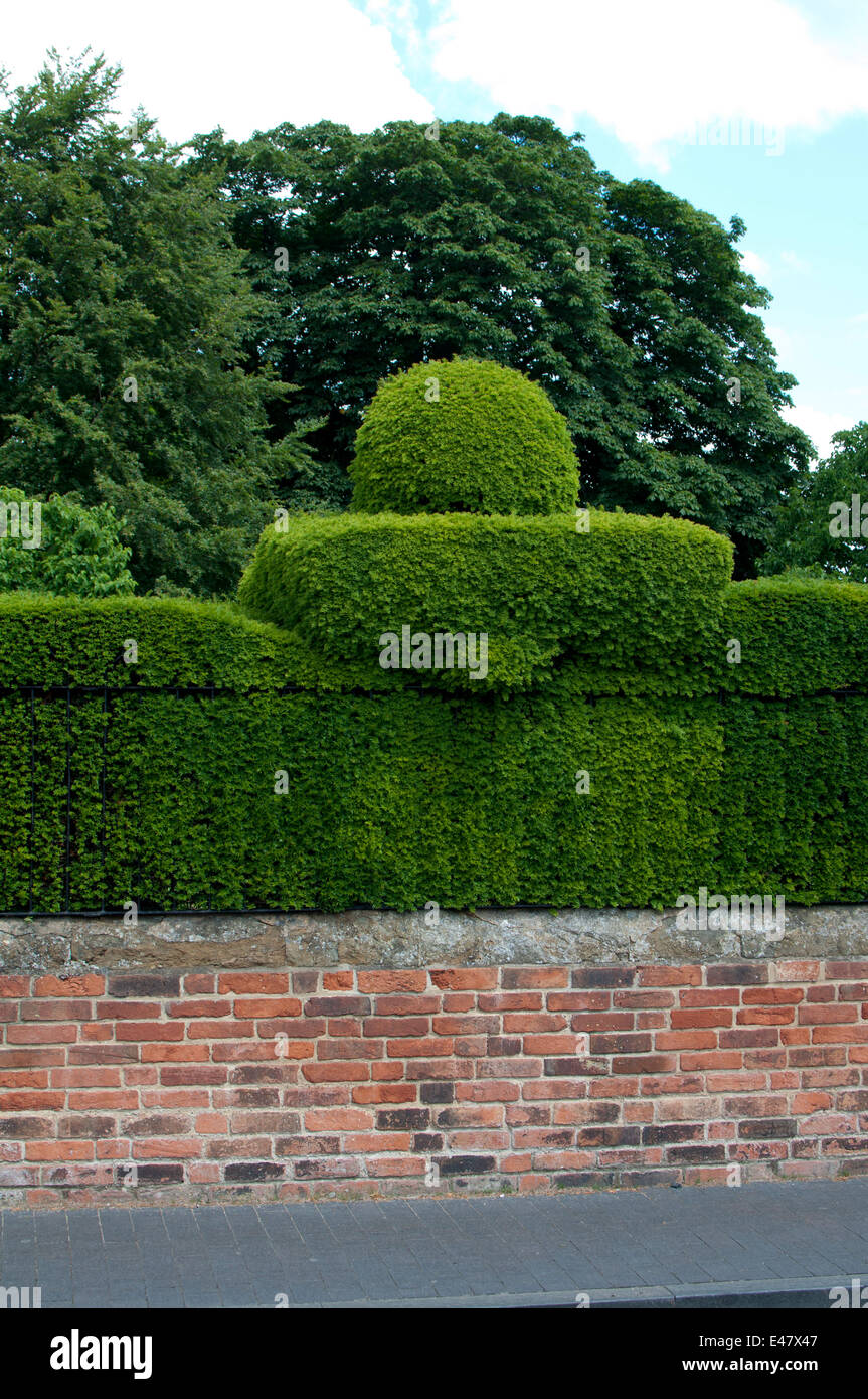 Shaped yew hedge, Great Garden of New Place, Stratford-upon-Avon, UK - Stock Image