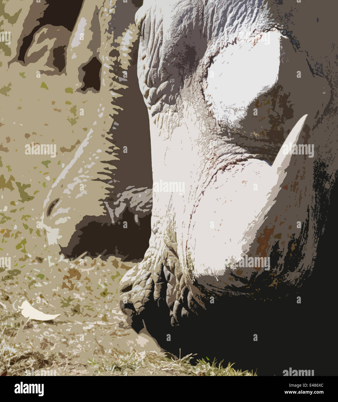 An artistic image of a white rhino with a sharp horn that looks like it is about to charge. Head to the ground, Stock Photo