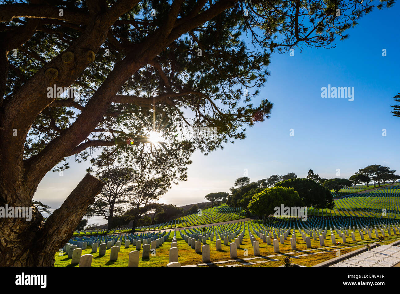 Sunbeams through pine tree branches. Fort Rosecrans National Cemetery,  San Diego, California, United States. - Stock Image