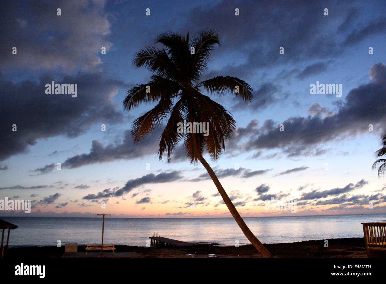 A palm tree on 7-mile beach in Grand Cayman - Stock Image