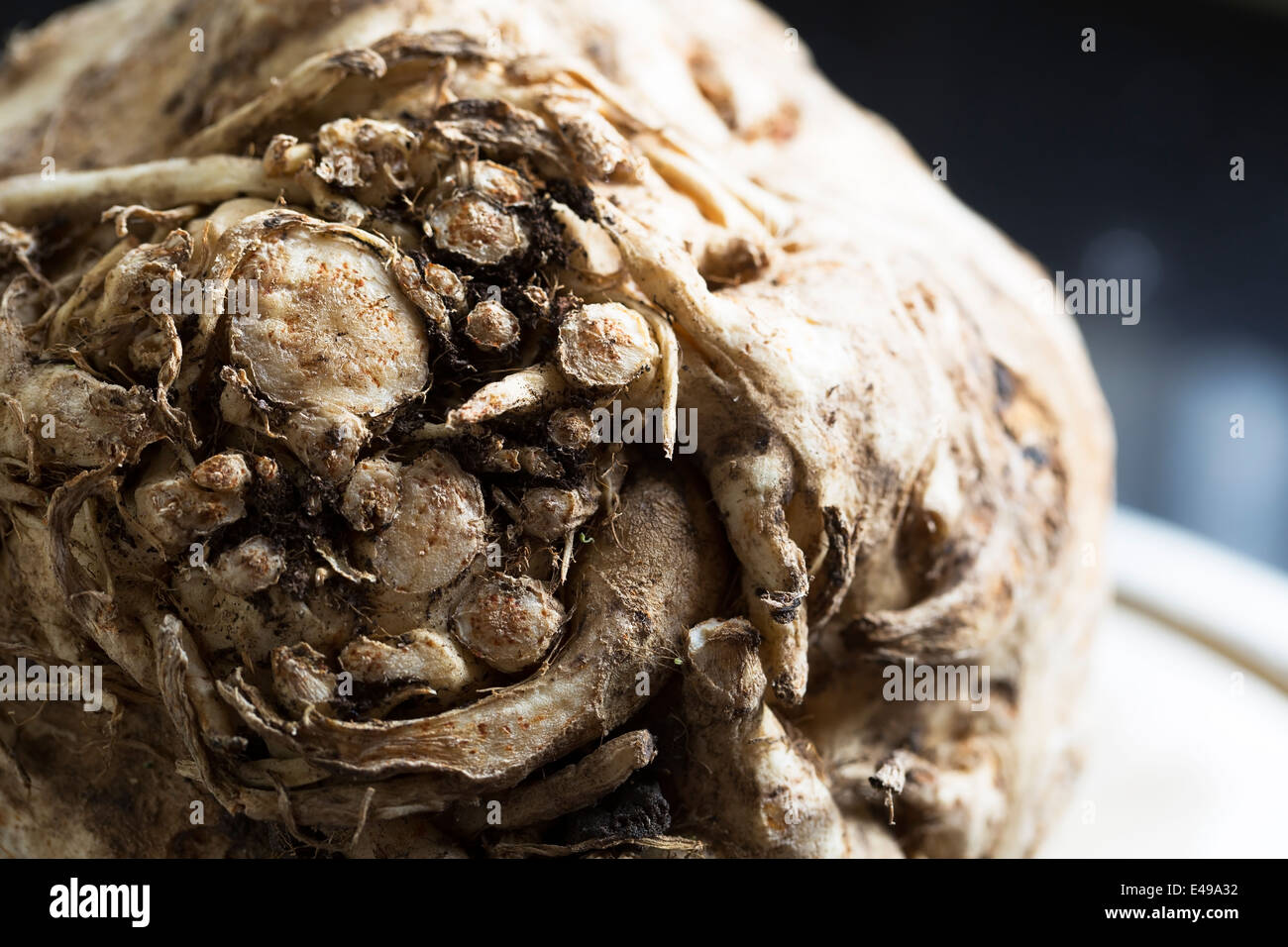 Celeriac, root vegetable recently harvested. - Stock Image