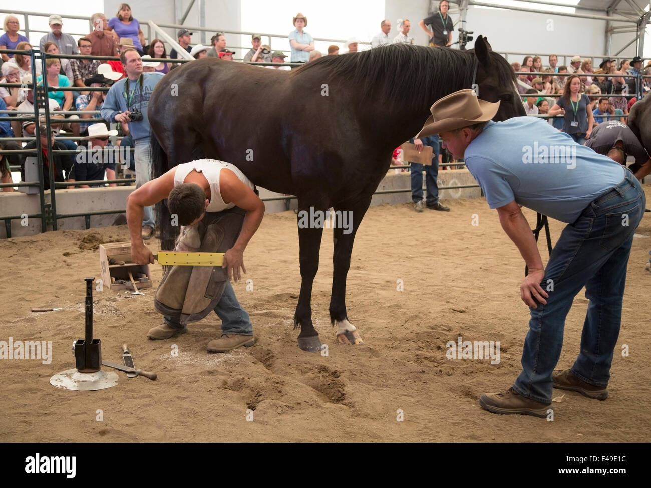 Calgary, Alberta, Canada. 06th July, 2014. Farrier finishes shoeing a horse as he competes in the final round of - Stock Image