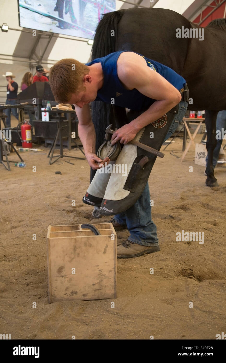 Calgary, Alberta, Canada. 06th July, 2014. Farrier shoeing horse as he competes in the final round of the World - Stock Image