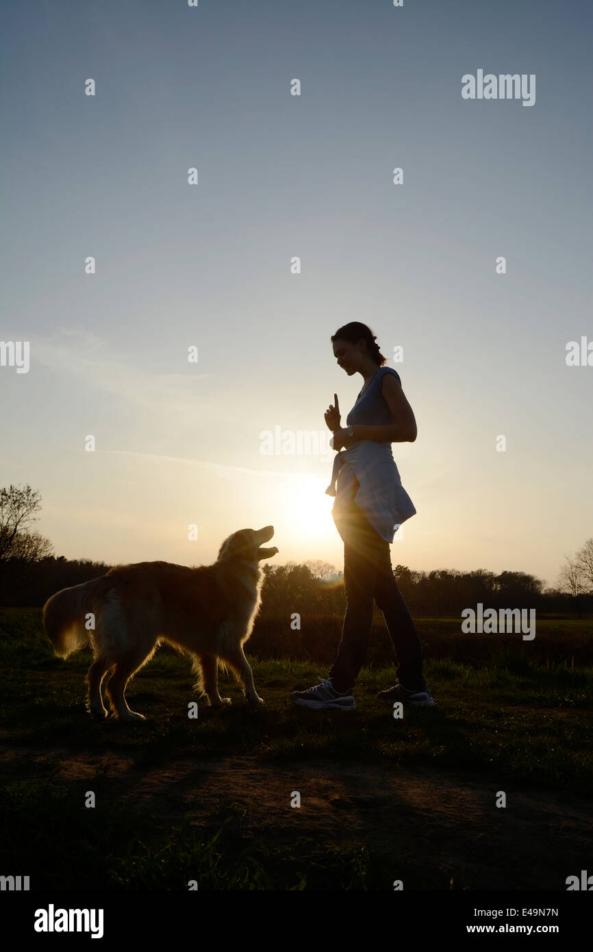 Young woman training Golden Retriever on meadow at sunset - Stock Image