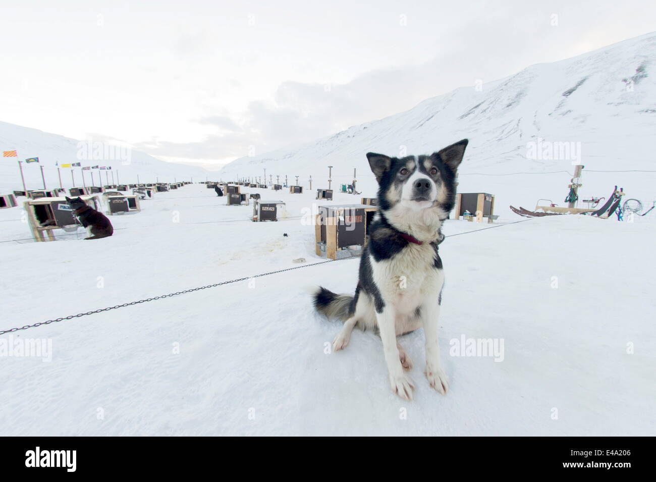 Husky dog sled operation, where each dog has its own kennel raised off the ground, Bolterdalen, Svalbard, Arctic, - Stock Image