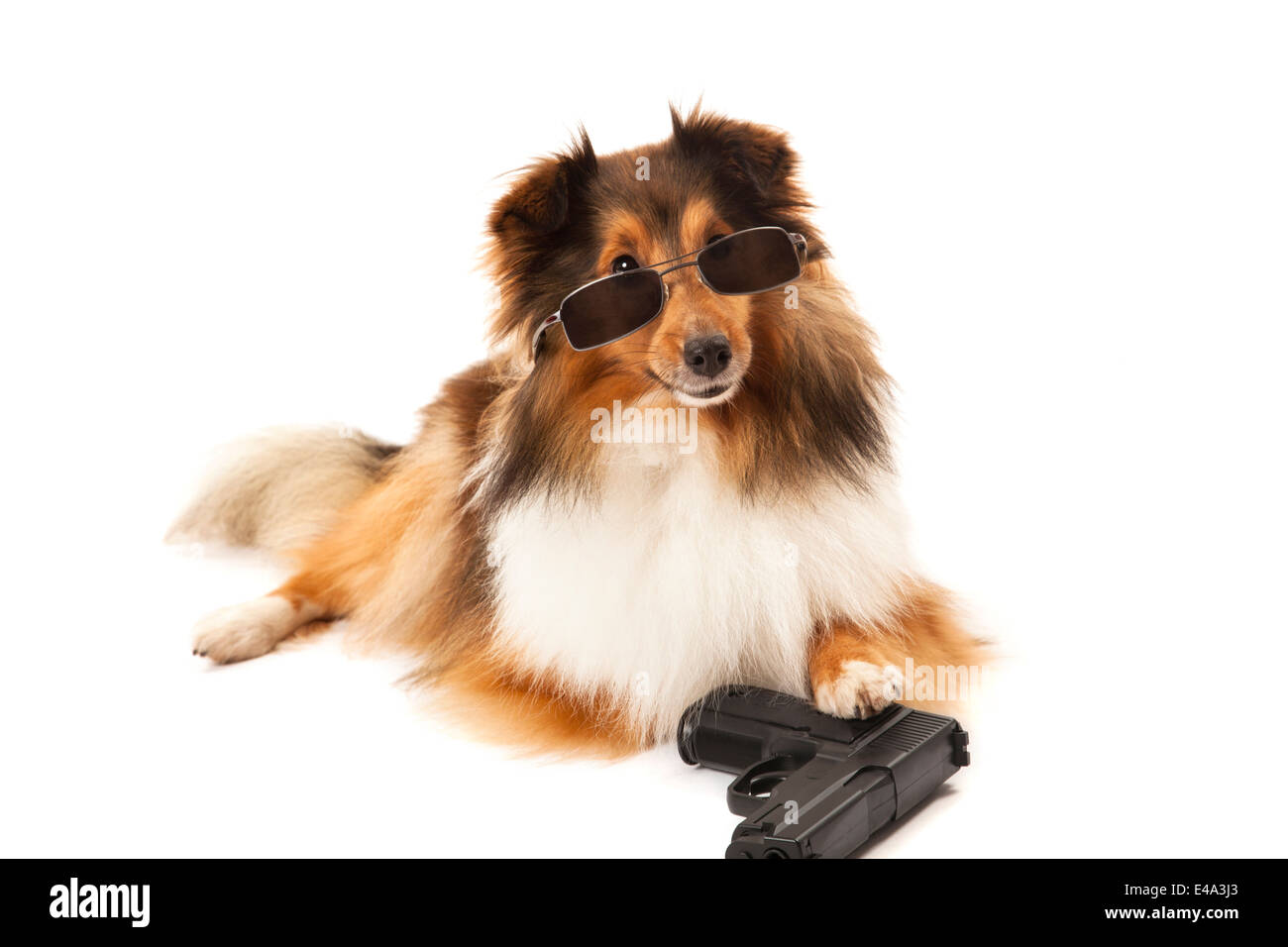 Close-up of hand in front of dog with sunglasses and gun over white background - Stock Image
