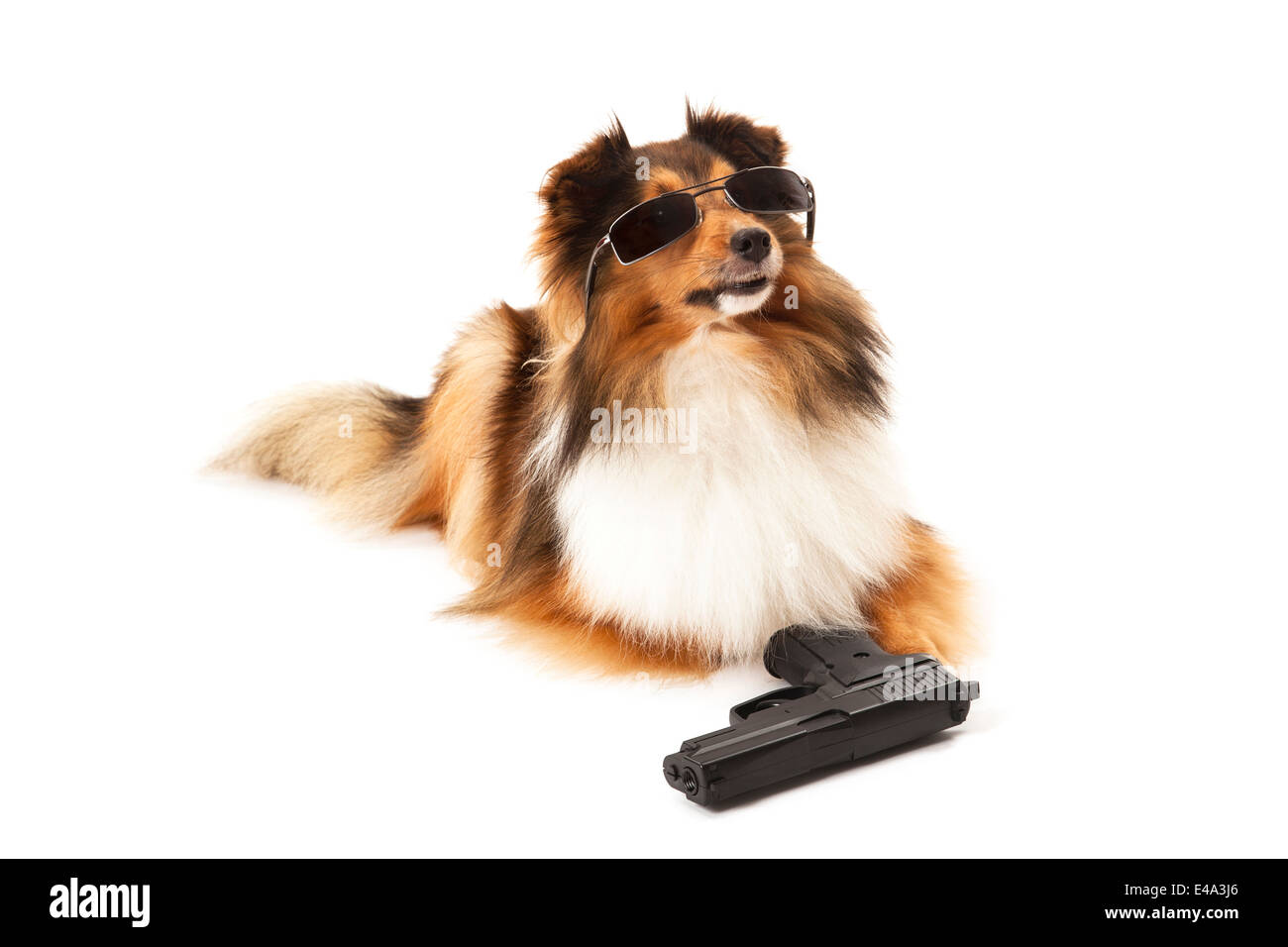 Portrait of dog with sunglasses and handgun over white background - Stock Image