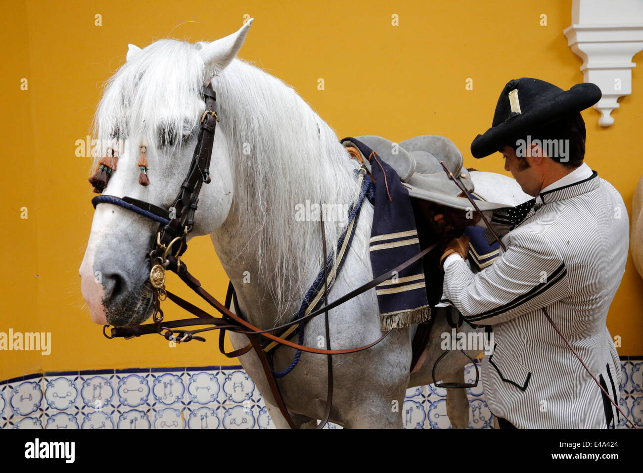 Preparing a horse to be ridden at the Royal Andalusian School of Equestrian Art, Jerez, Andalucia, Spain, Europe - Stock Image