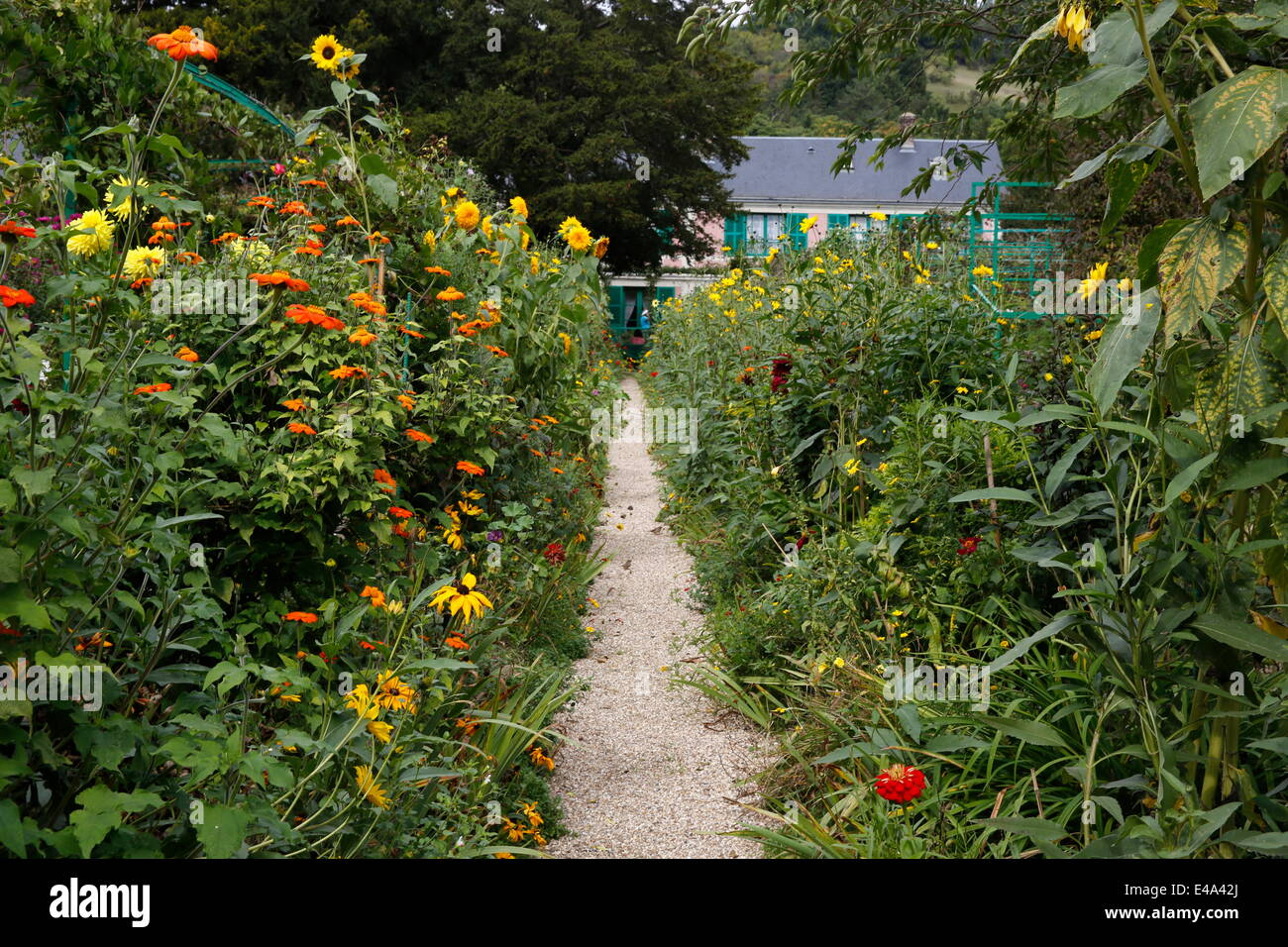 Monet's garden in Giverny, Yvelines, Normandy, France, Europe - Stock Image