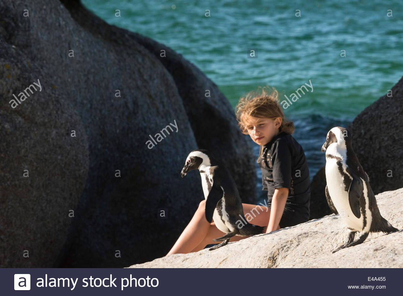 Young girl sitting on a rock watches two jackass penguins walk past her, Boulders Beach National Park, Simonstown, - Stock Image