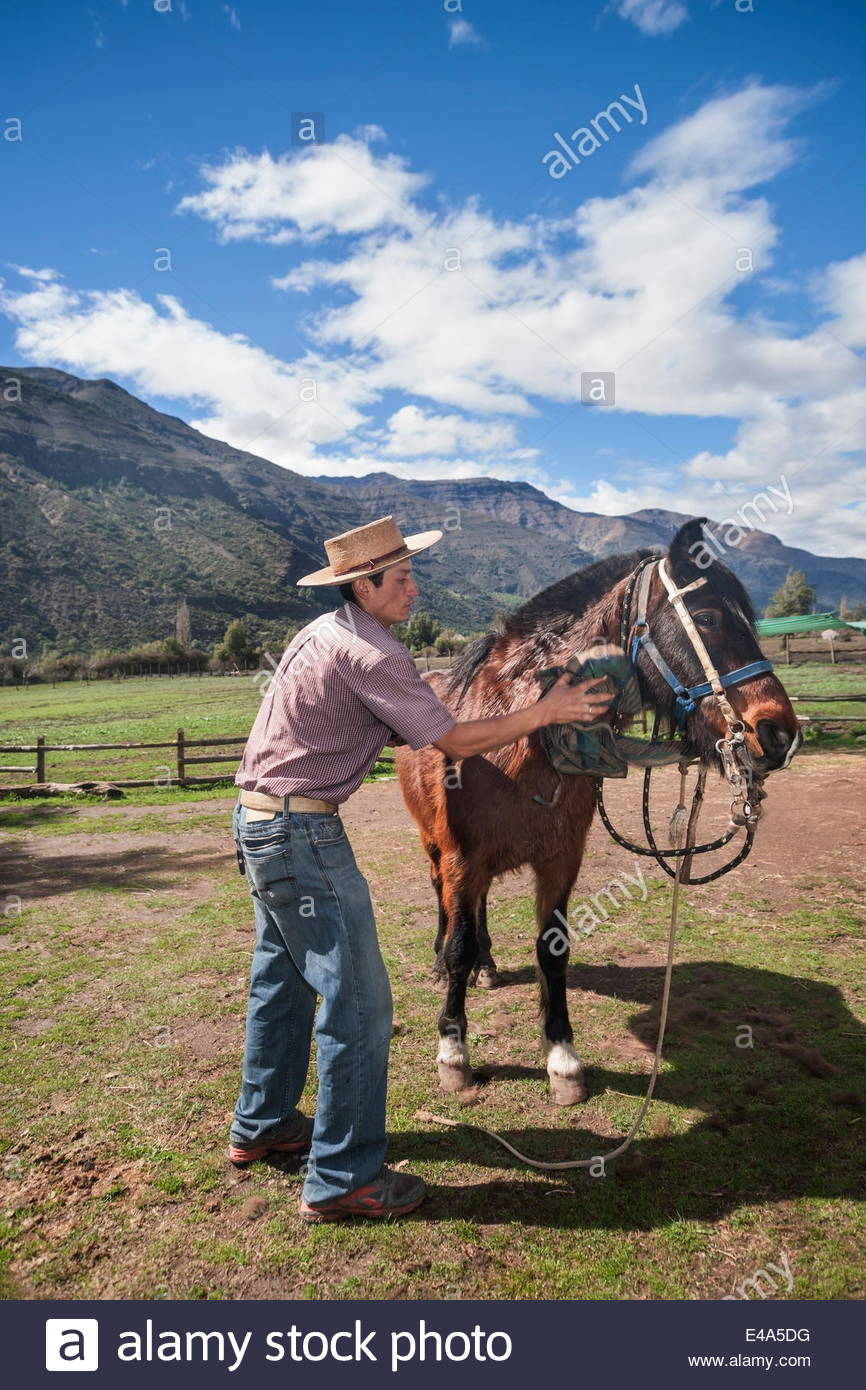 Chilean cowboy (arriero) brushes a horse on a ranch in El Toyo region of Cajon del Maipo, Chile, South America - Stock Image