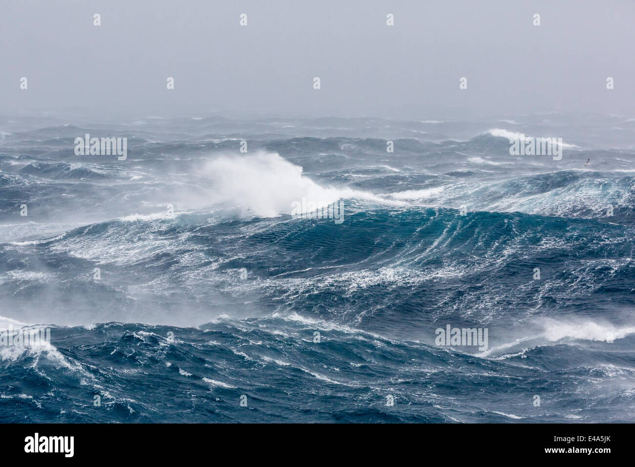 Gale force westerly winds build large waves in the Drake Passage, Antarctica, Polar Regions - Stock Image
